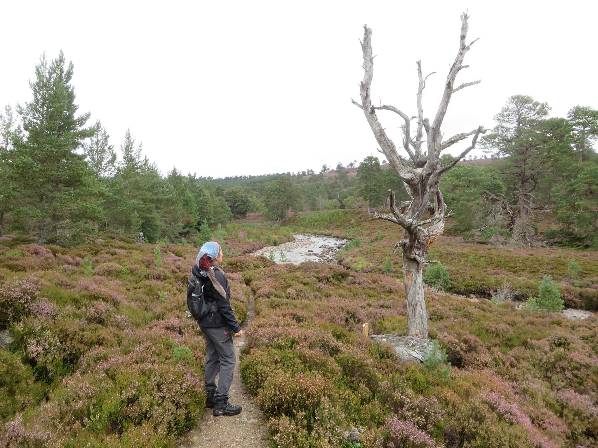 Wanderung am lynn of Dee