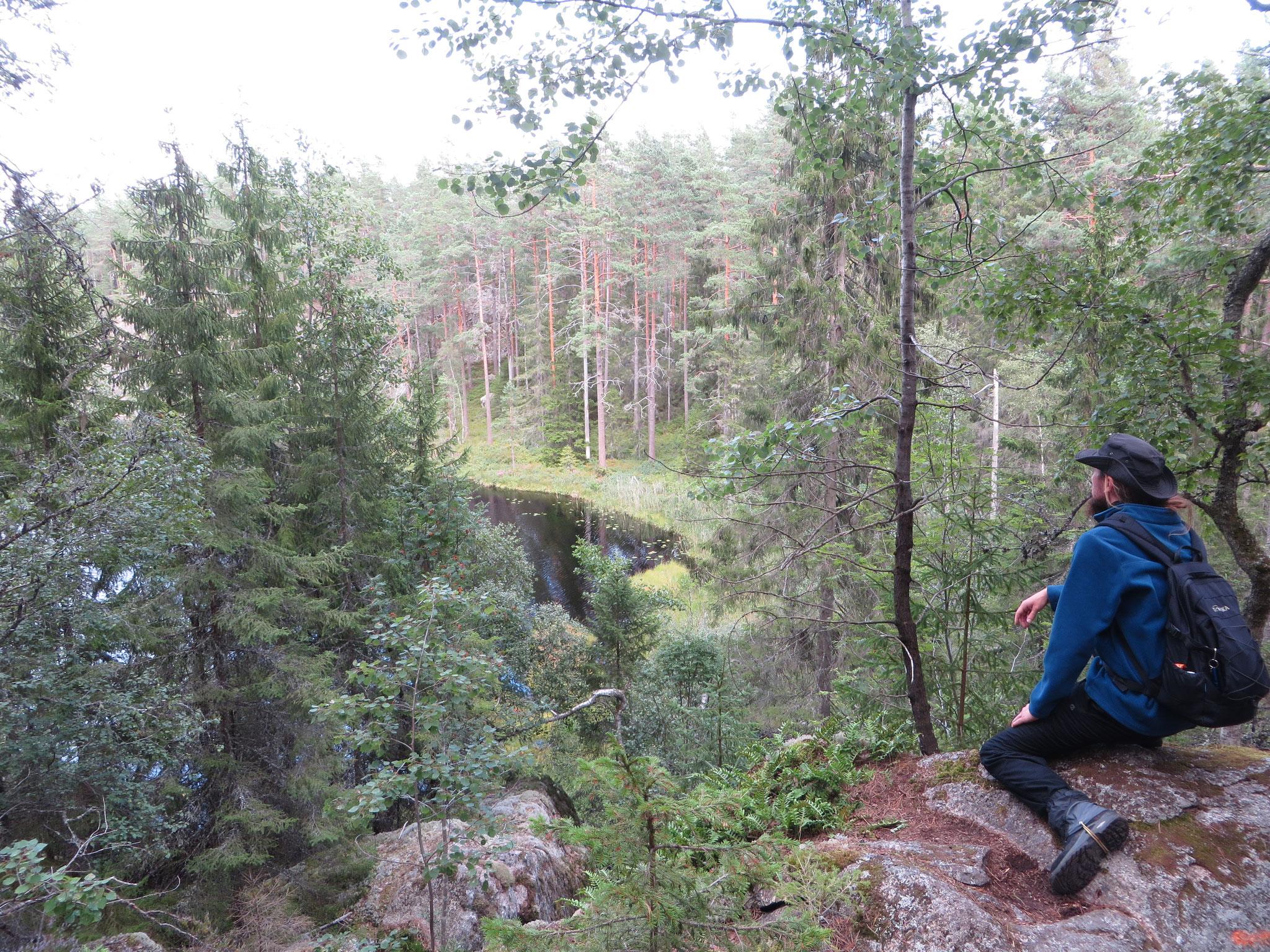 Schwarzwald mit Kiefern? Nein, Tiveden, Schweden 2019