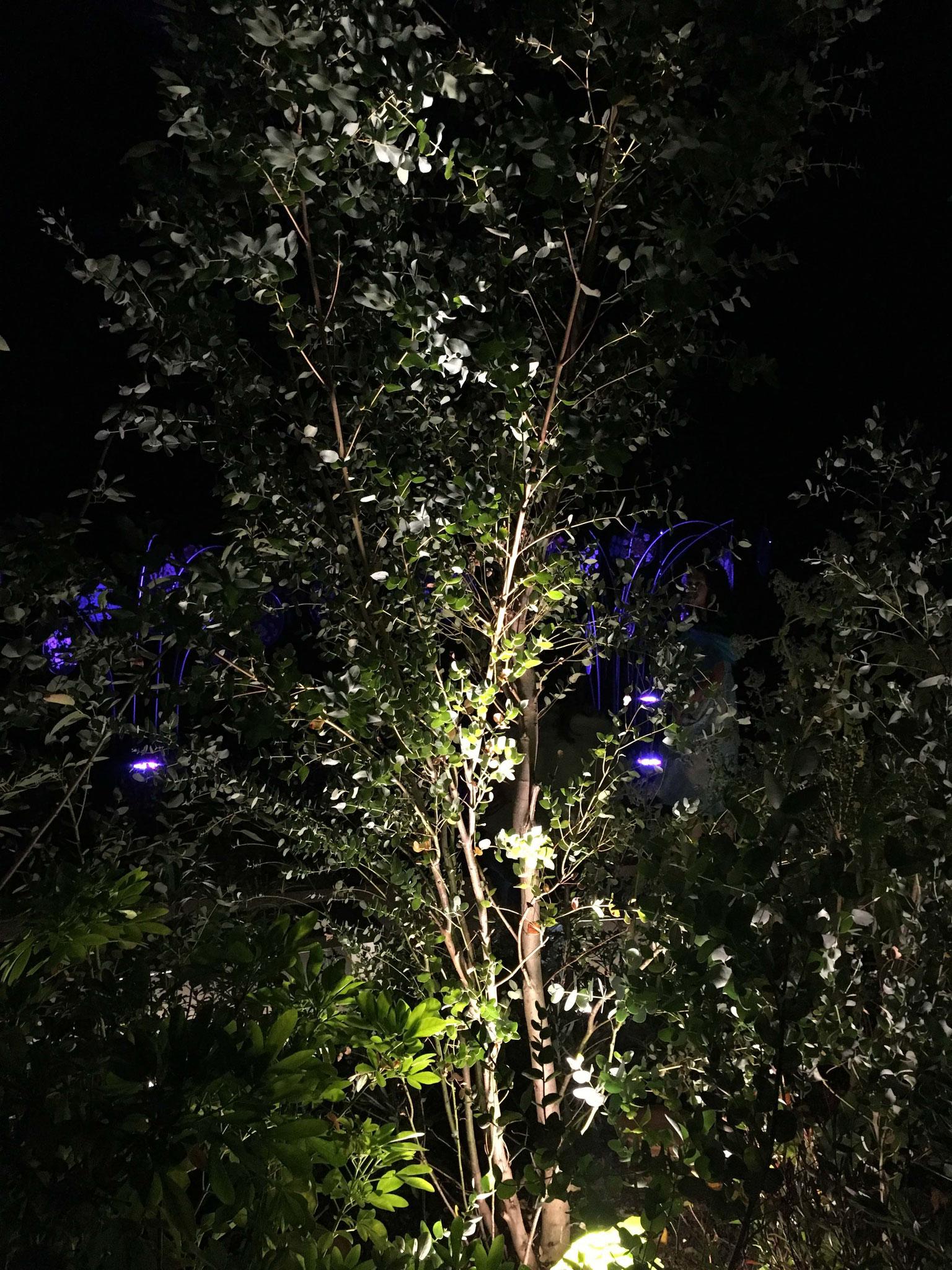 Jardin éclairé en été