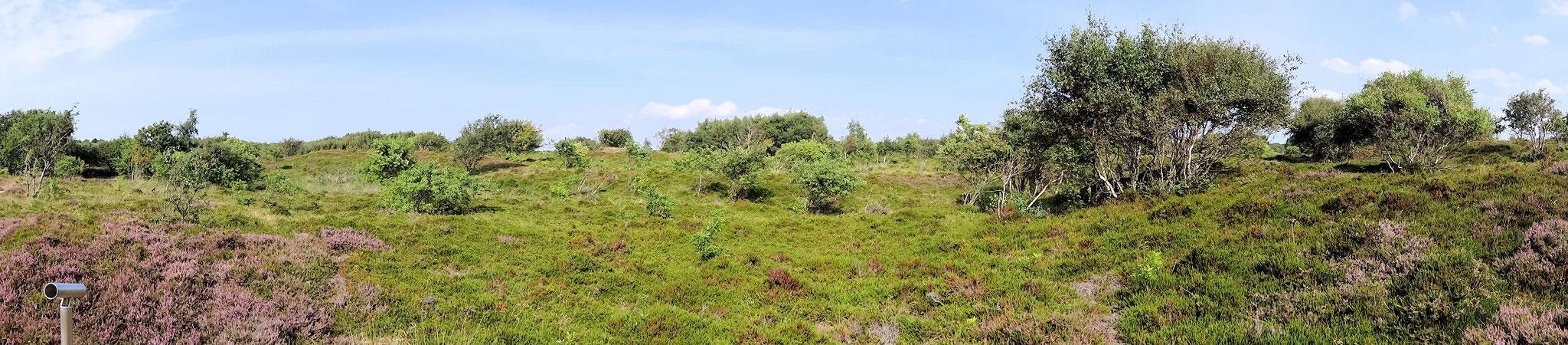Duhner Heide