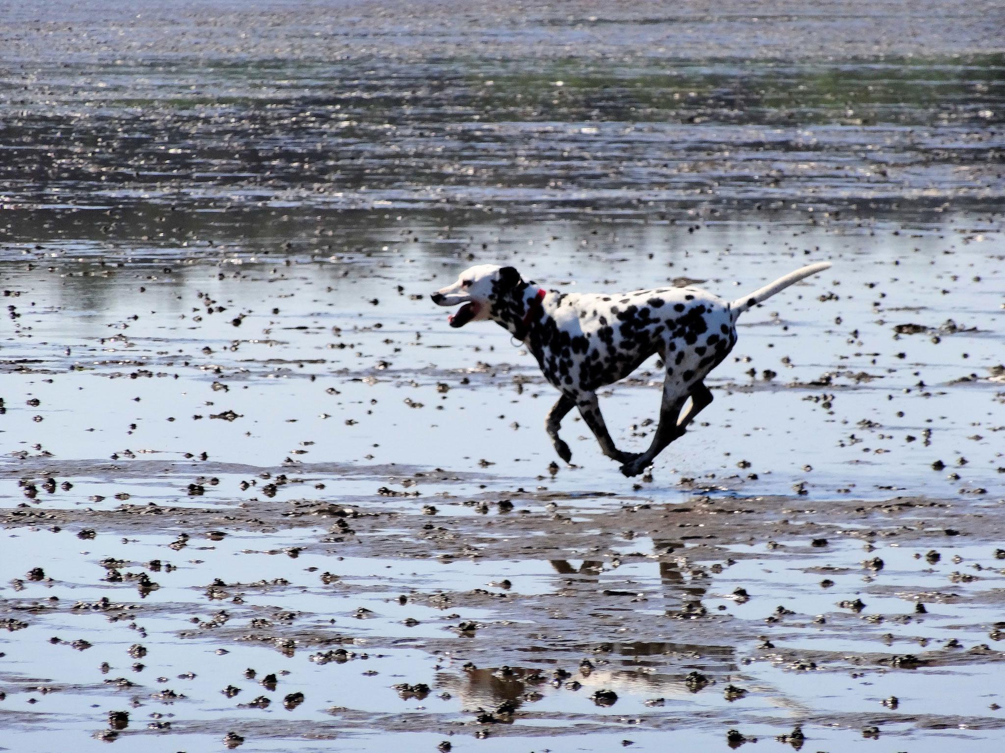 Strände und Wiesen für Hunde in Cuxhaven