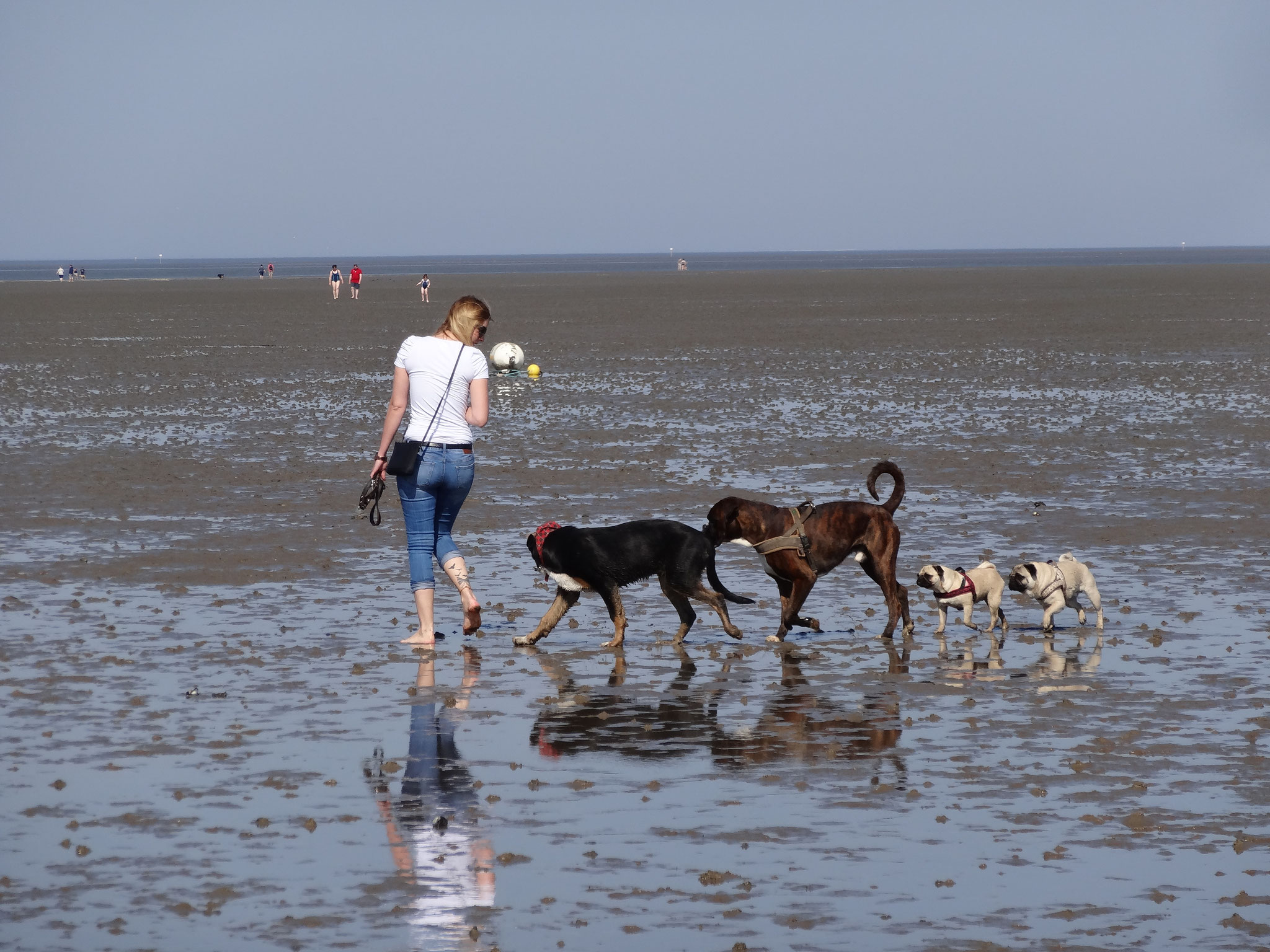 Hund am Strand in Cuxhaven