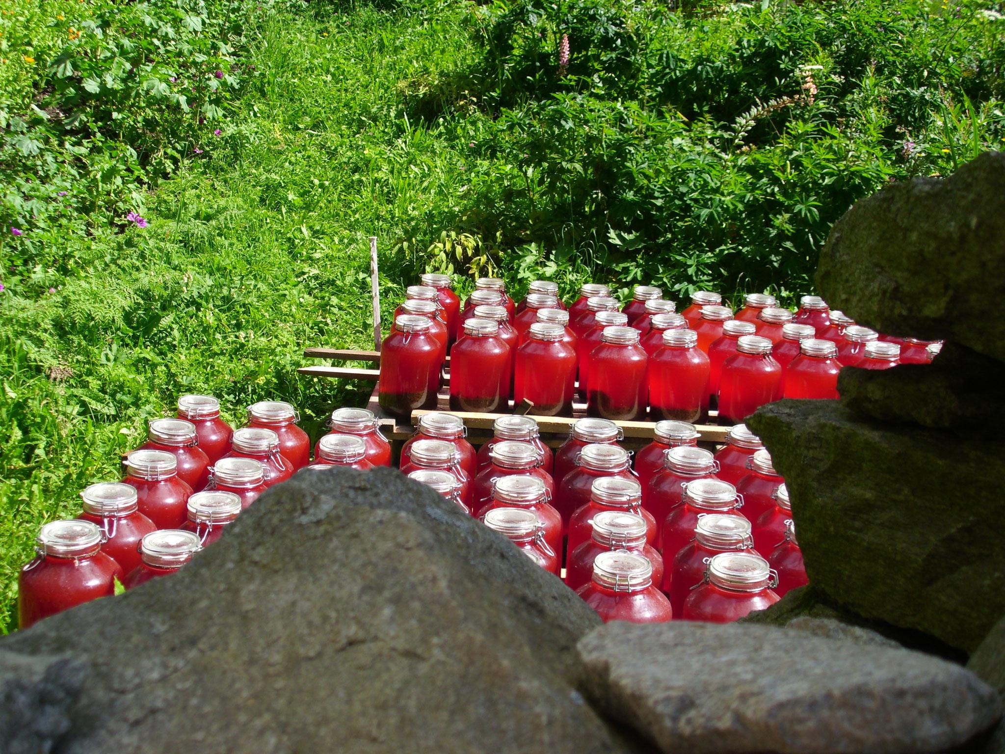 In einem der Gärten wird das Johannisöl langsam rot...