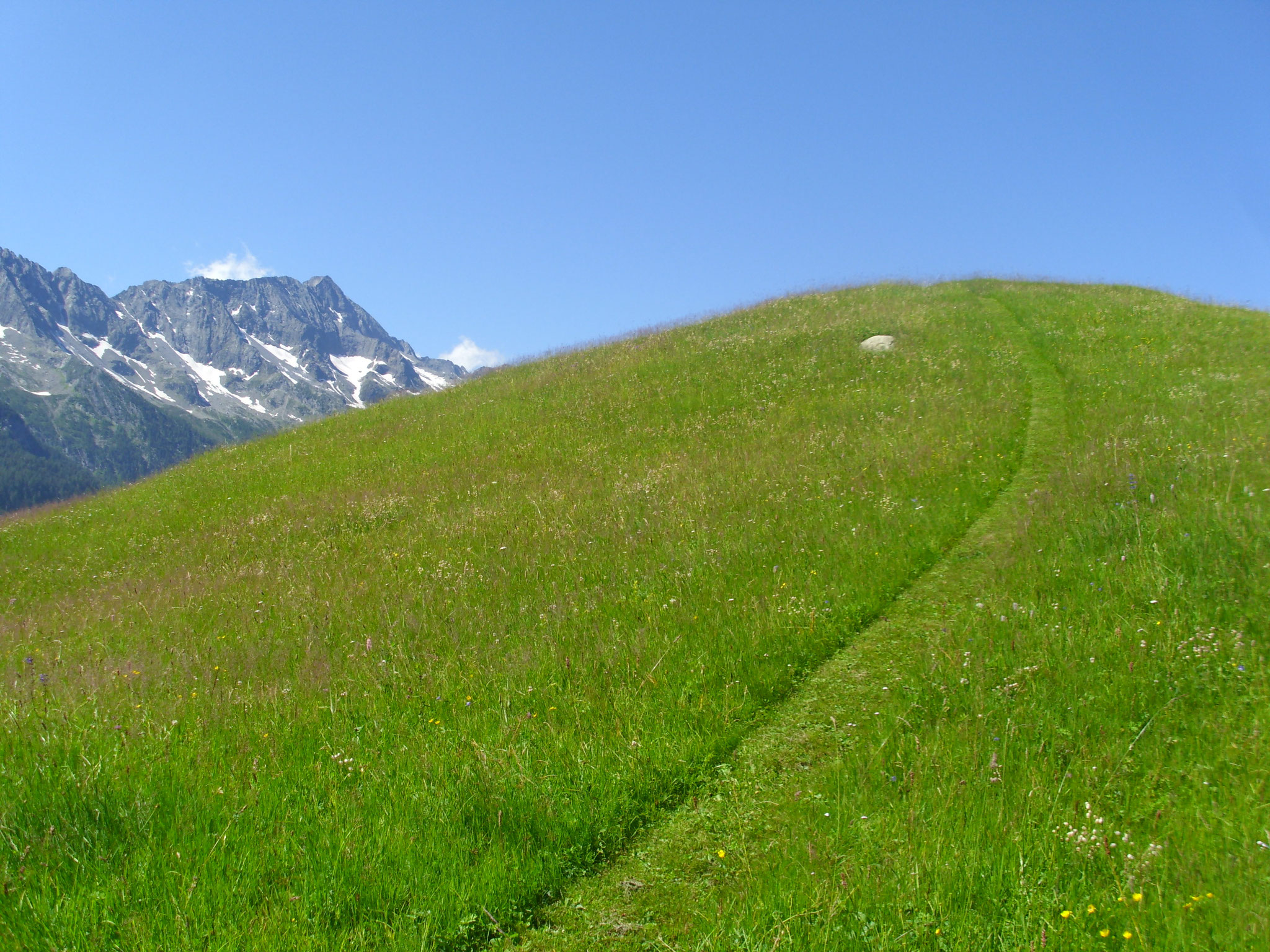 Auf der Alp