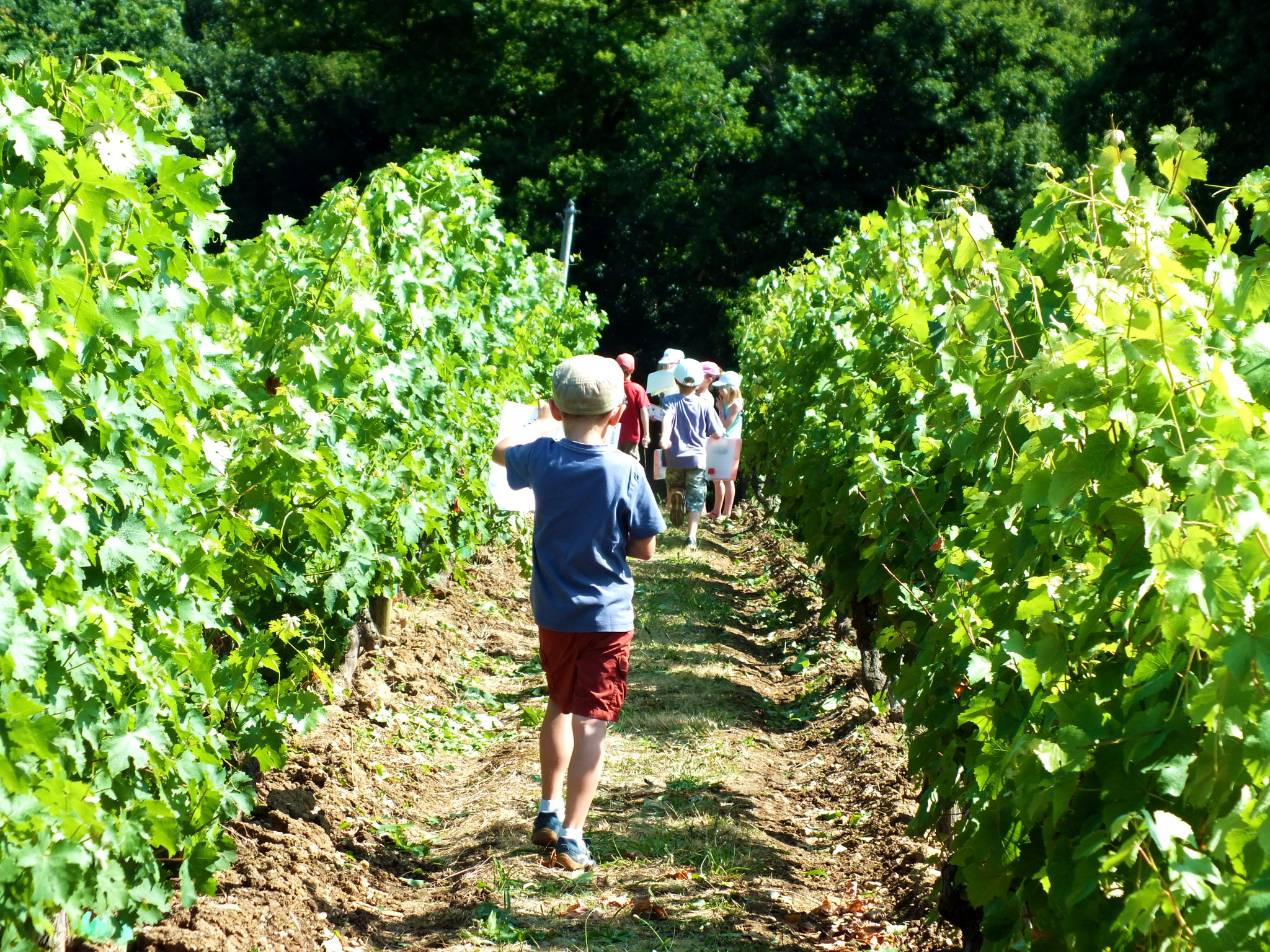 vendanges familles enfant parents adultes Musée vigne et vin d'Anjou