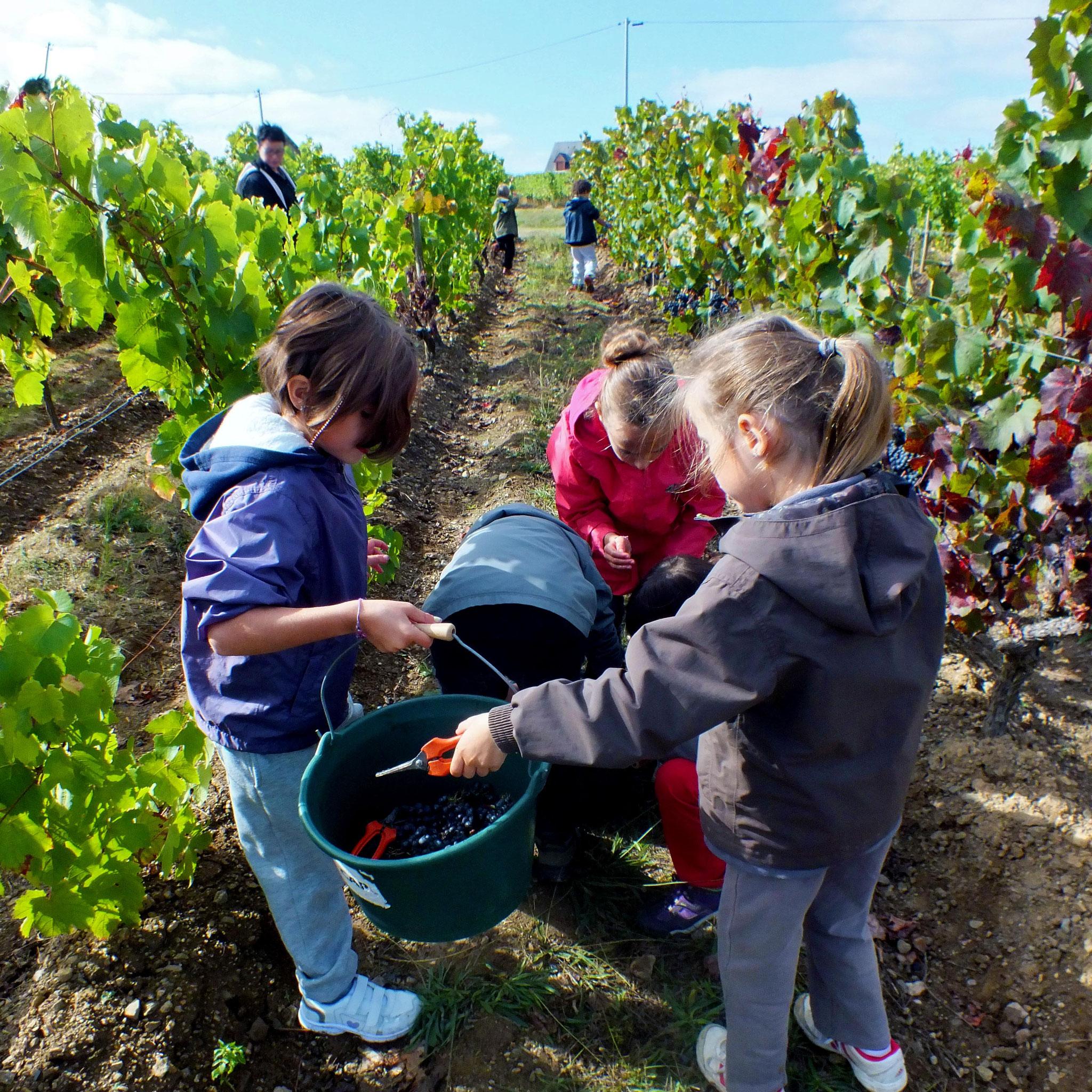 enfants vendanges groupe Musée vigne et vin d'Anjou