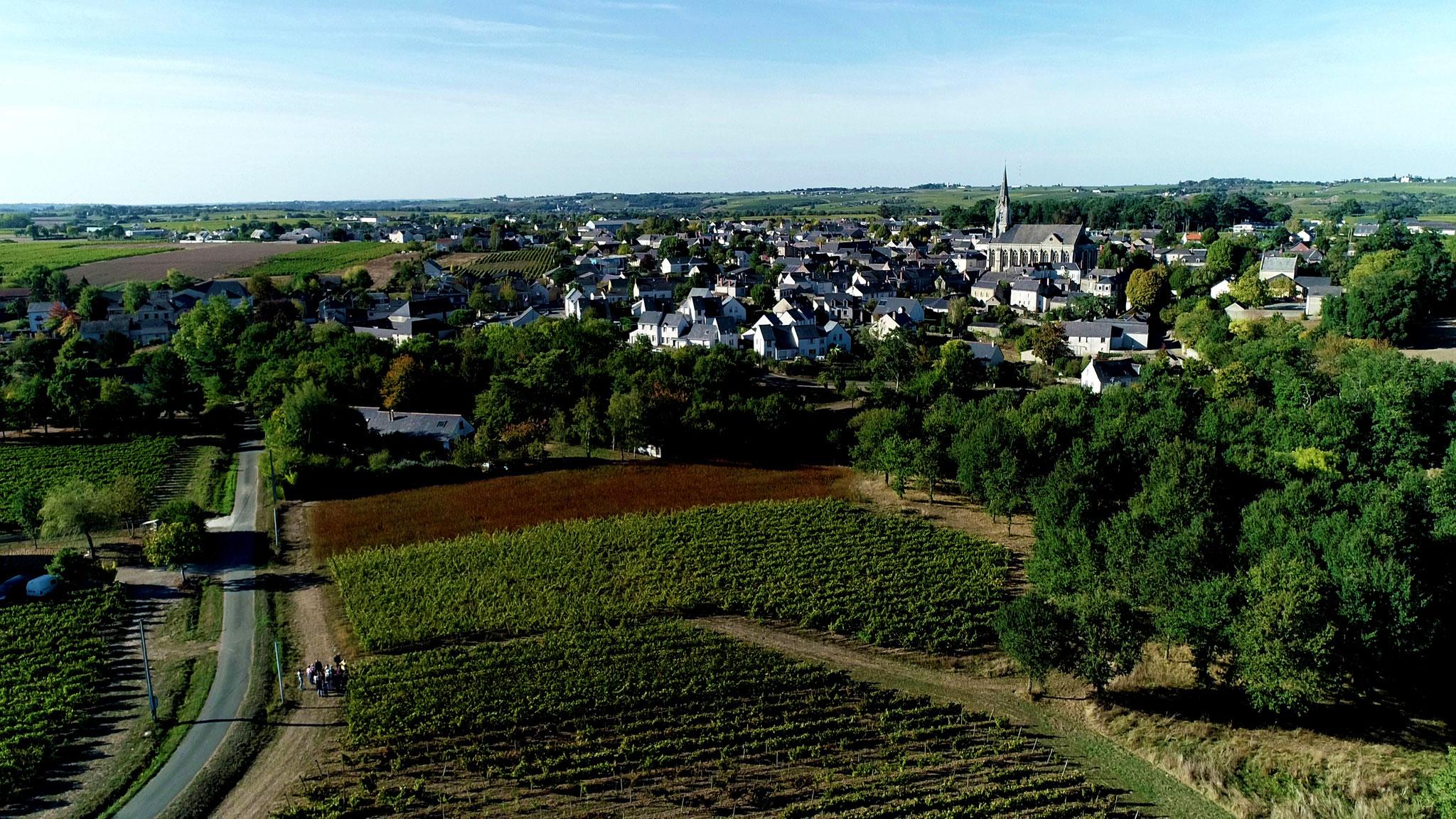 Vignes Musée vigne et vin d'Anjou Saint Lambert du Lattay