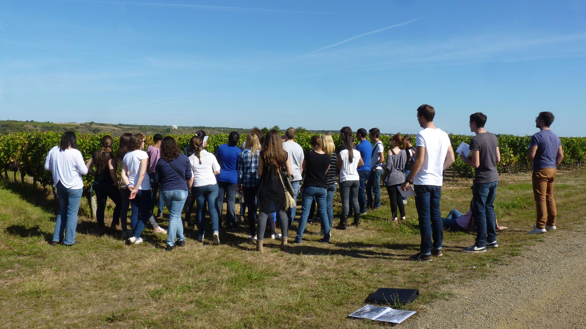 Groupe visite étudiants lycée collège Musée vigne et vin d'Anjou