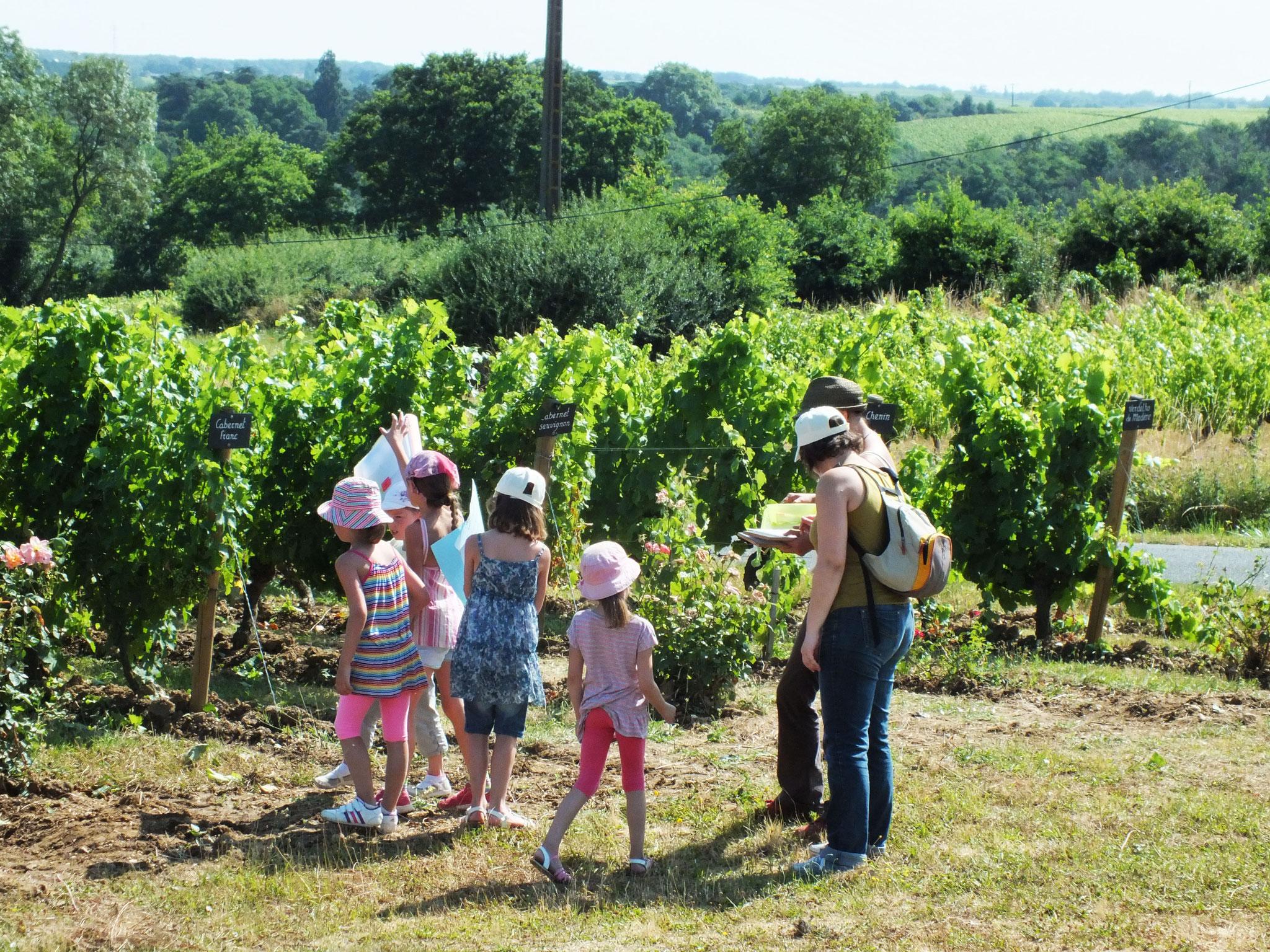 Atelier en famille enfants et parents au Musée de la vigne et du vin d'Anjou
