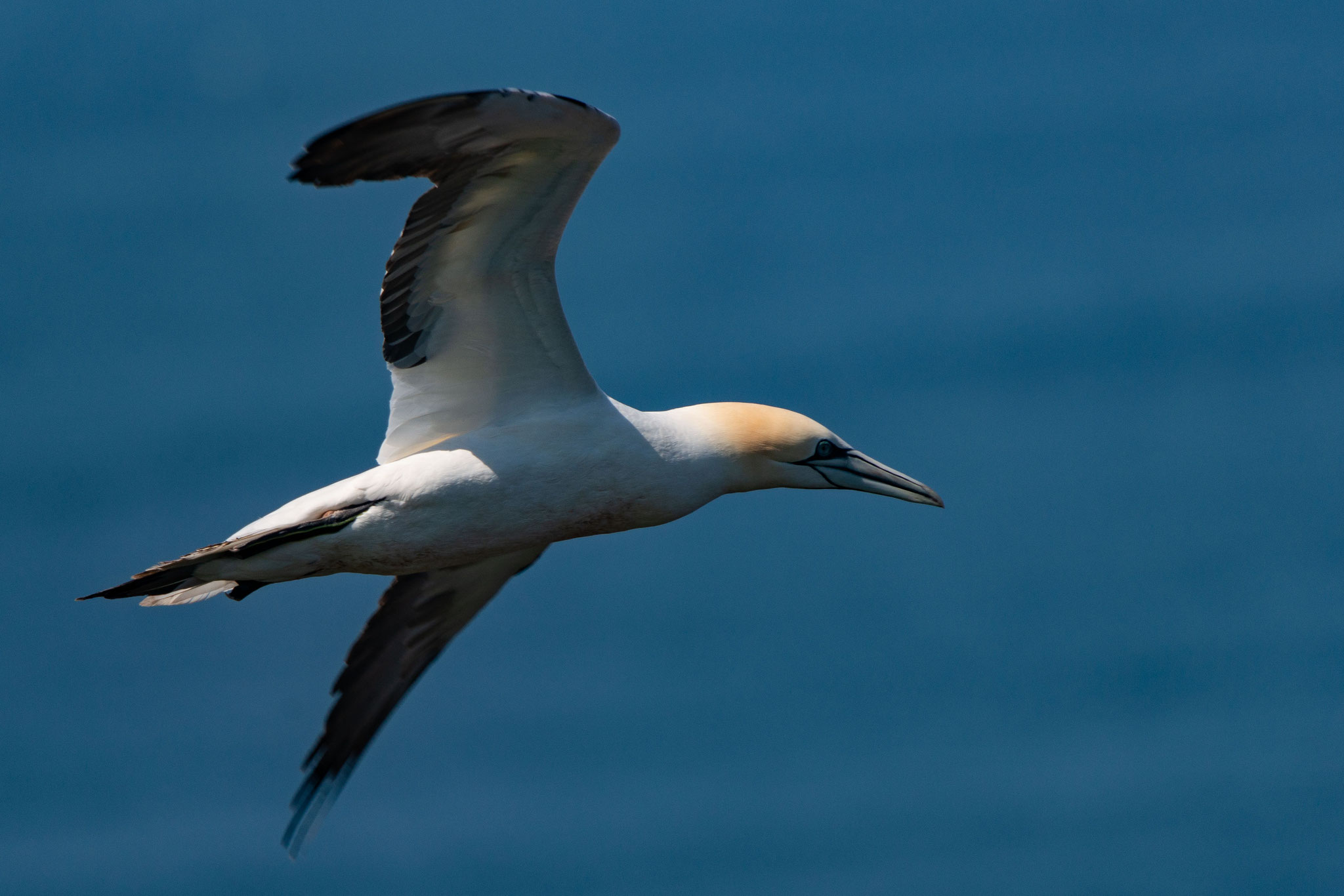 Helgoland by Sven