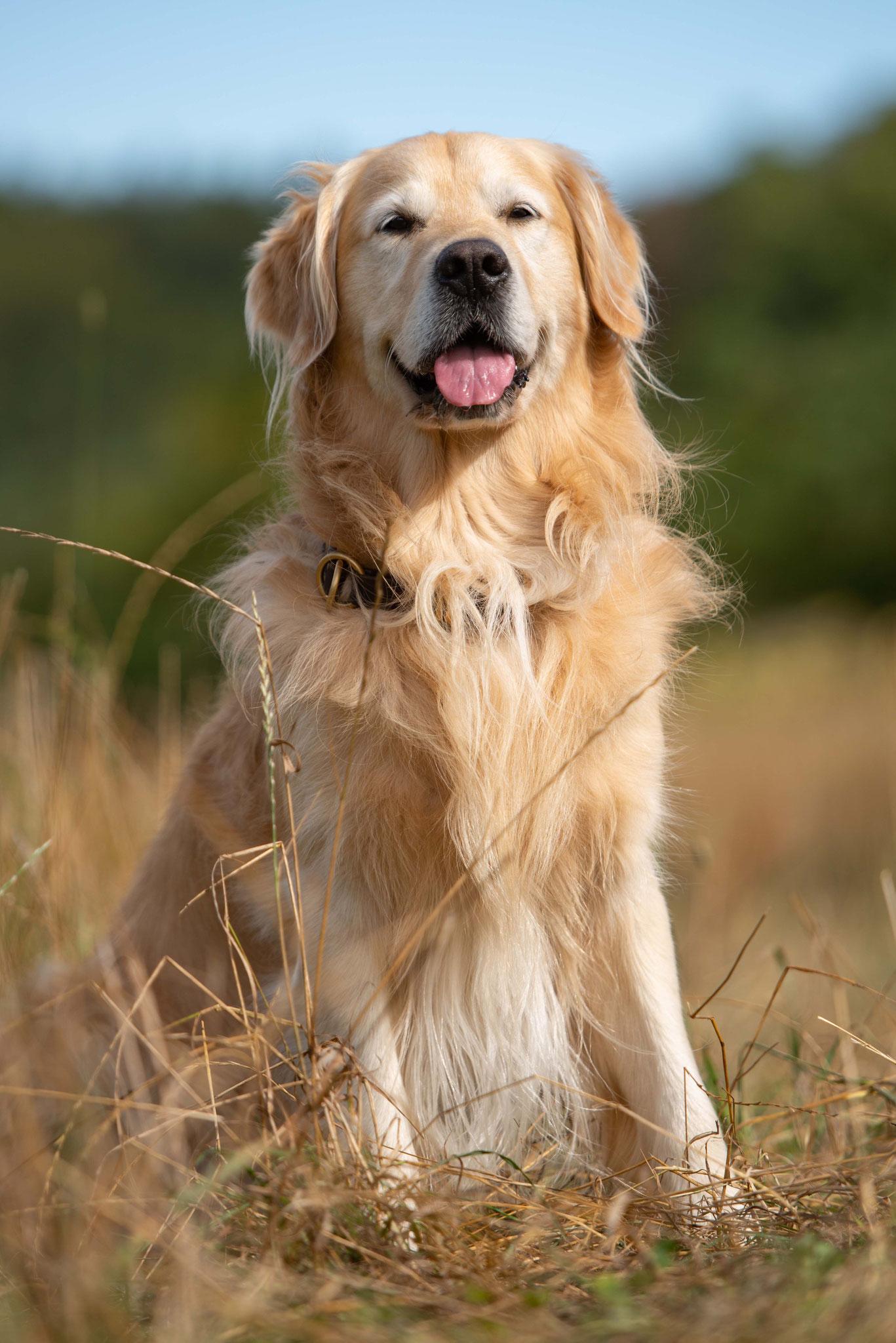 Hundetreffen by Sven