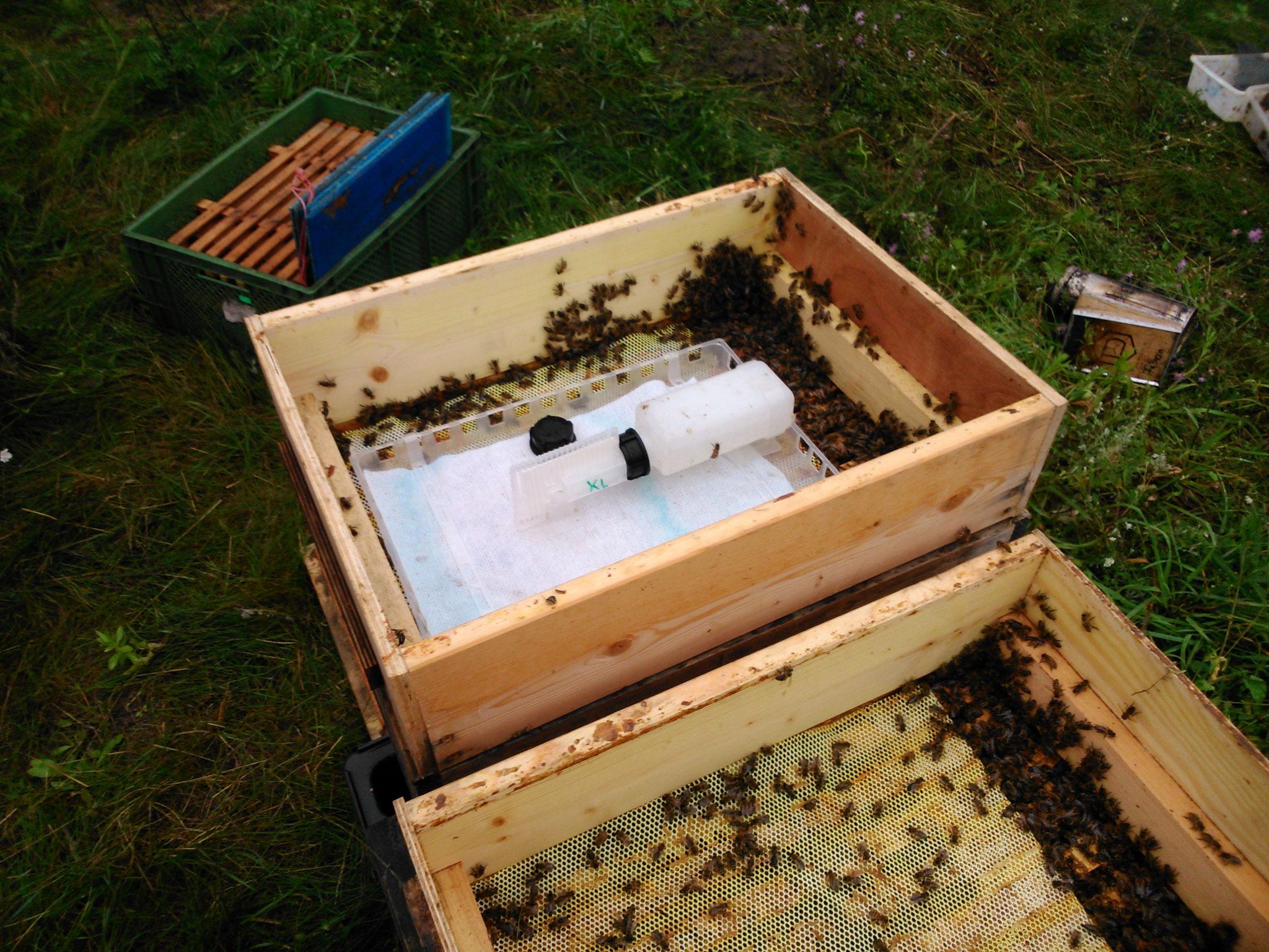 ...der Verdunster wird auf die obersten Waben des Bienenstocks gesetzt. Die darin enthaltene Ameisensäure gelangt über einen Docht auf ein Vliestuch und kann von dort aus verdunsten. Während der Behandlungzeit werden die herabfallenden Milben gezählt.