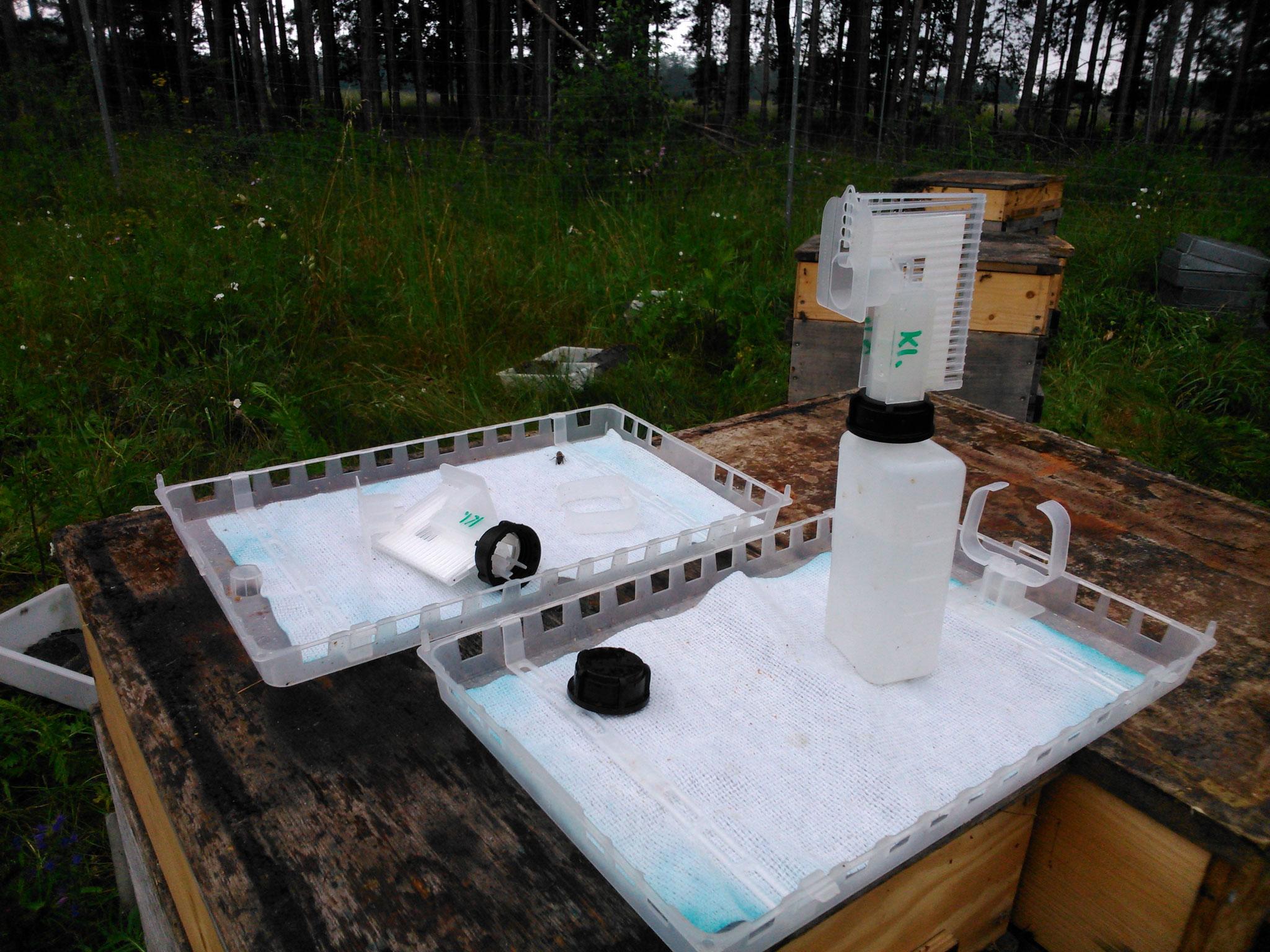Nach der Honigernte Ende Juli findet die erste Varroamilben-Behandlung mit dem Nassenheider Verdunster statt. In der Flasche befindet sich Ameisensäure, die für 10 - 14 Tage in der Bienenbeute verbleibt.