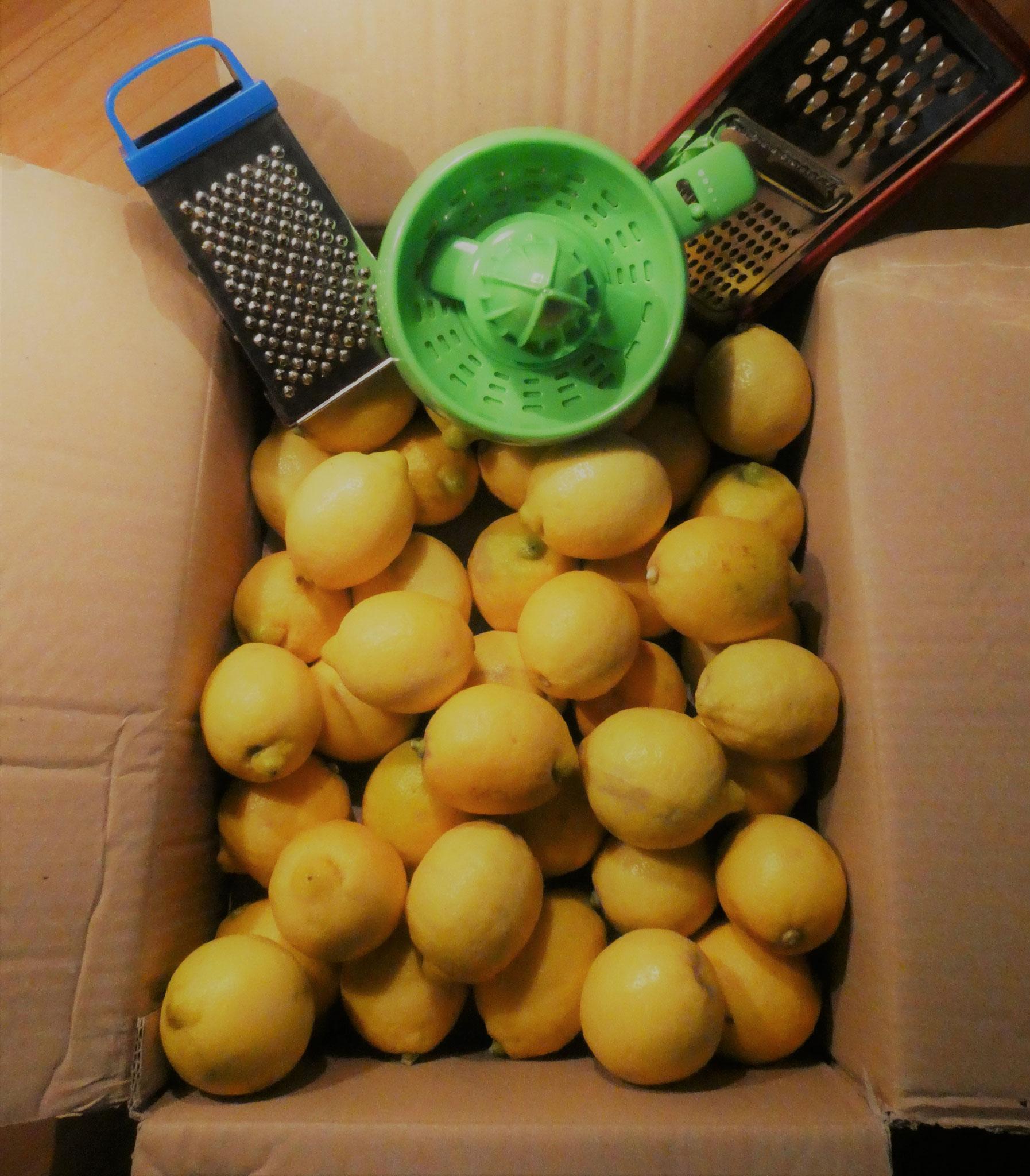Zitronen von einer italienischen Kooperative