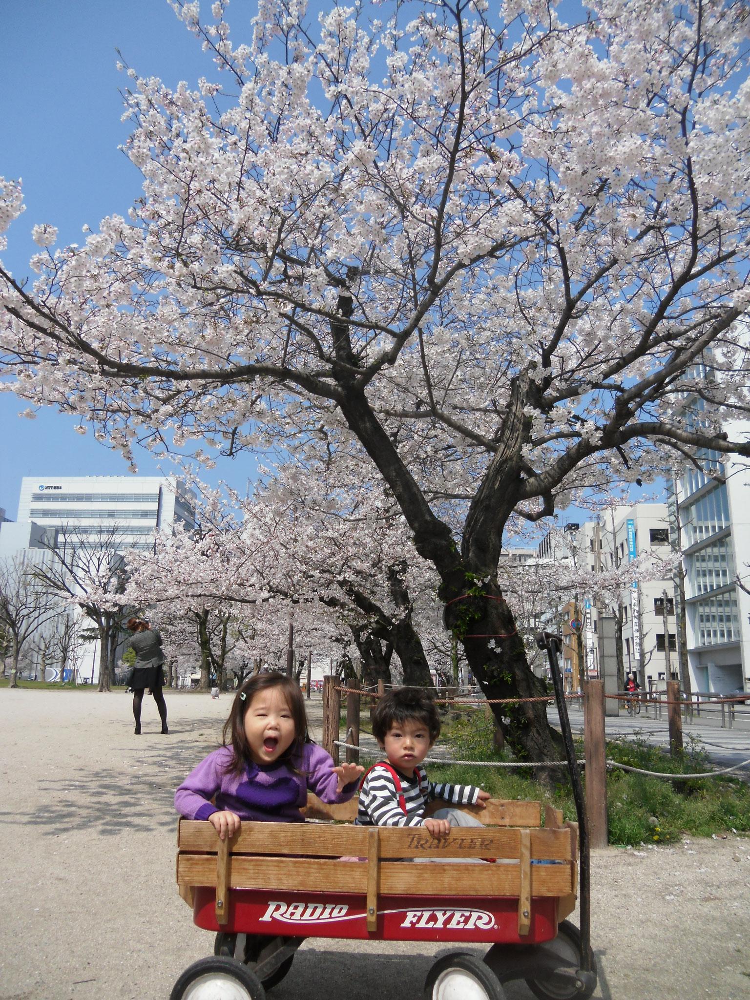 4月 お花見遠足
