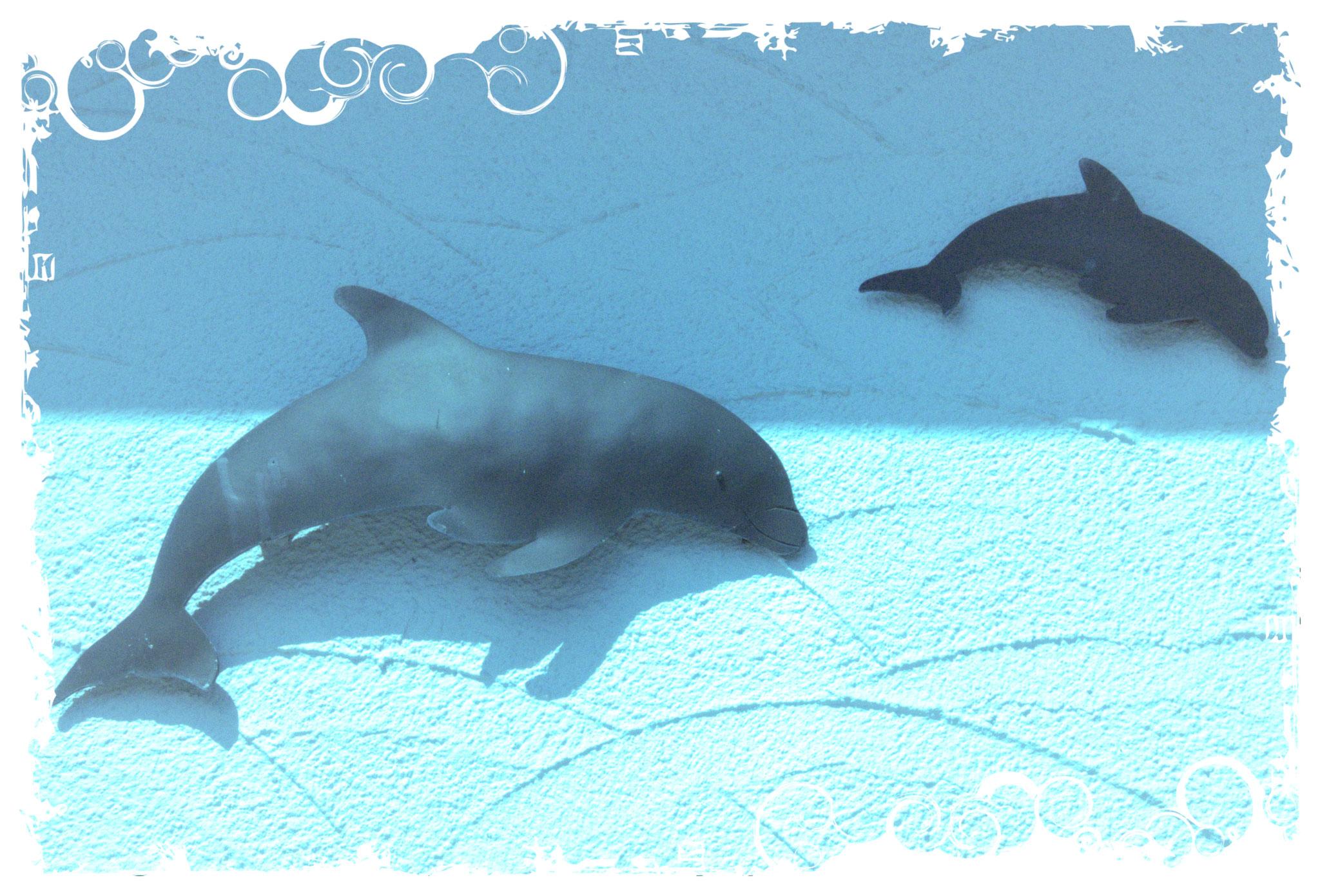 Haus Delphin