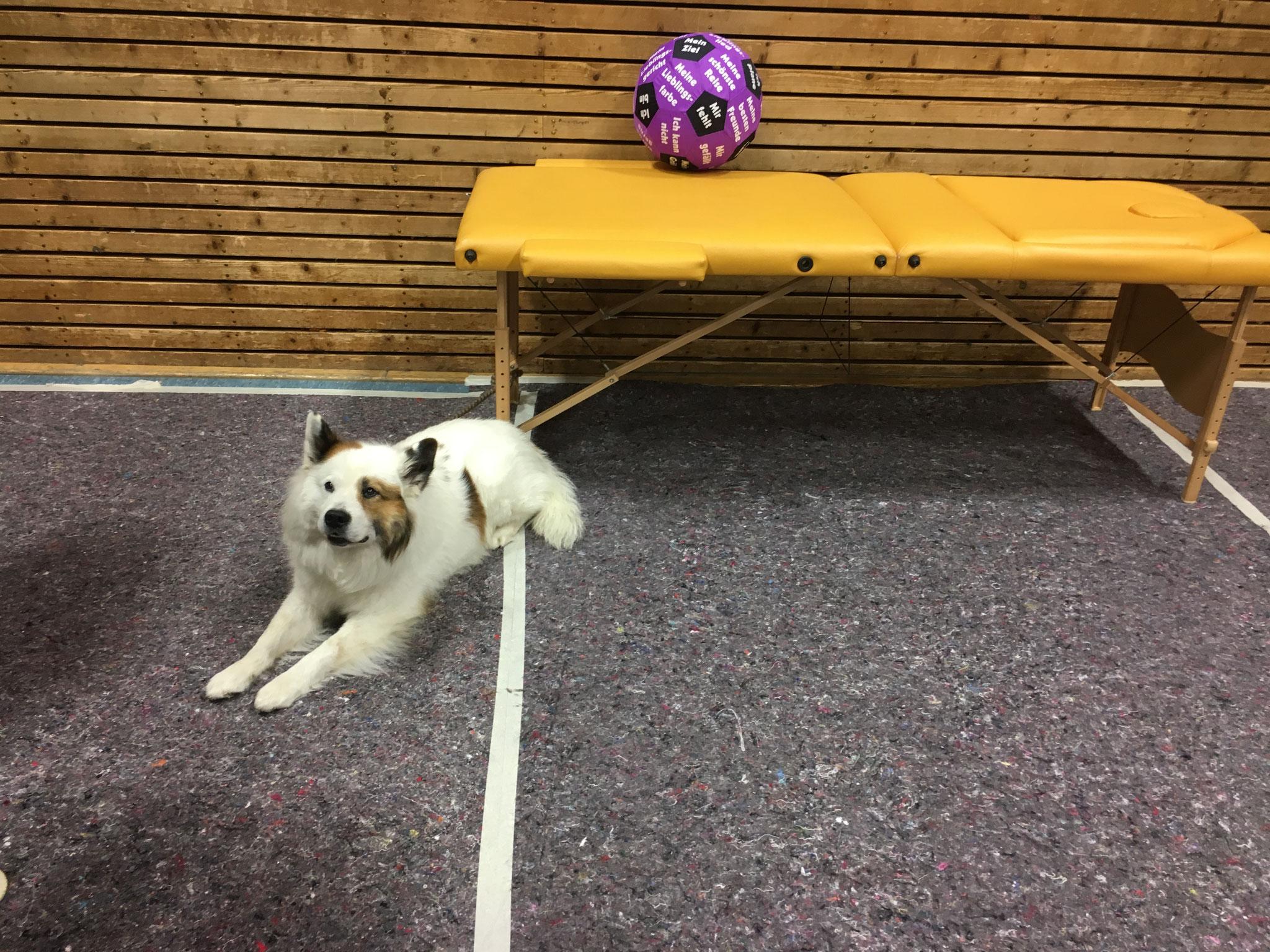 Ergotherapie Fröndenberg - Praxis Stefanie Herbst mit Therapiehund