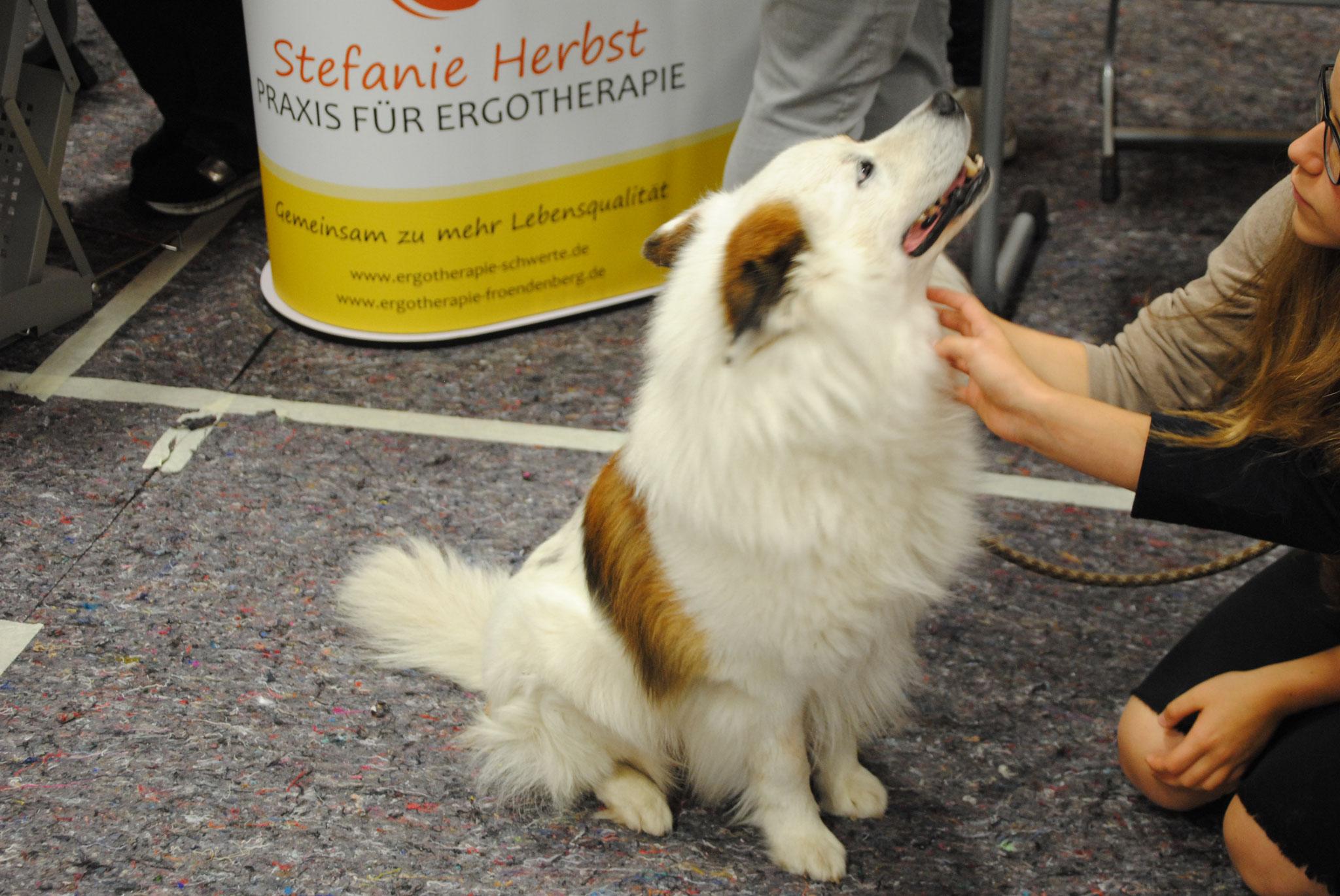 Therapiehund der Ergotherapie Praxis - Stefanie Herbst