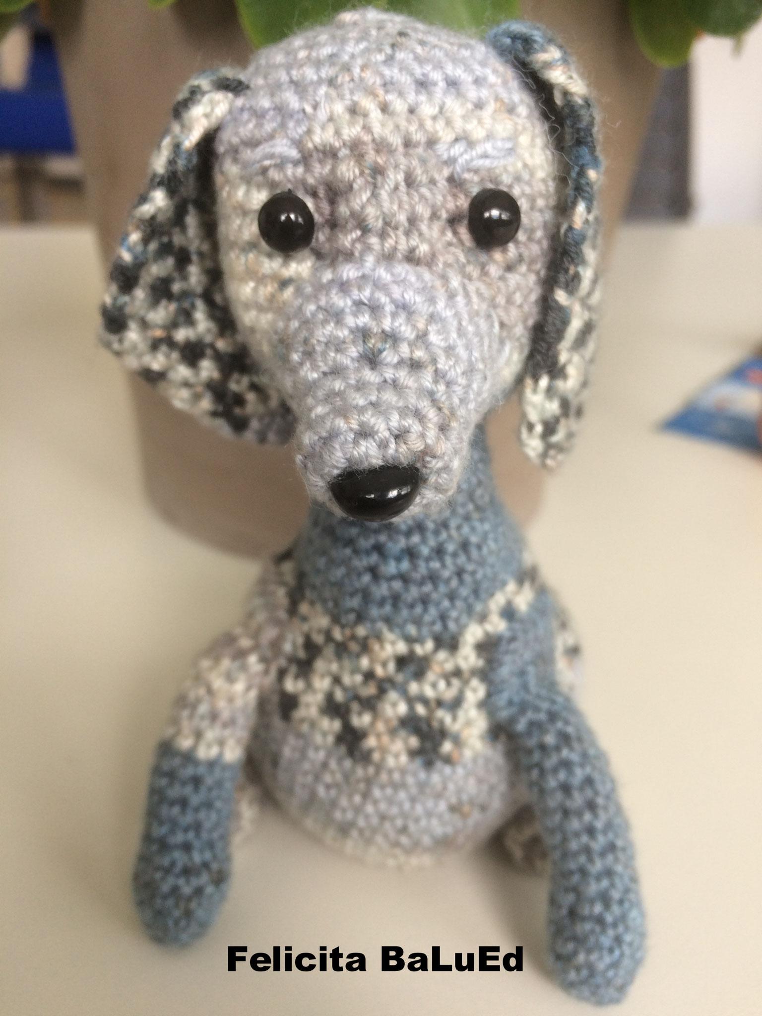 Hund: Felicita BaLuEd / Artikel-Nr. 3029.001