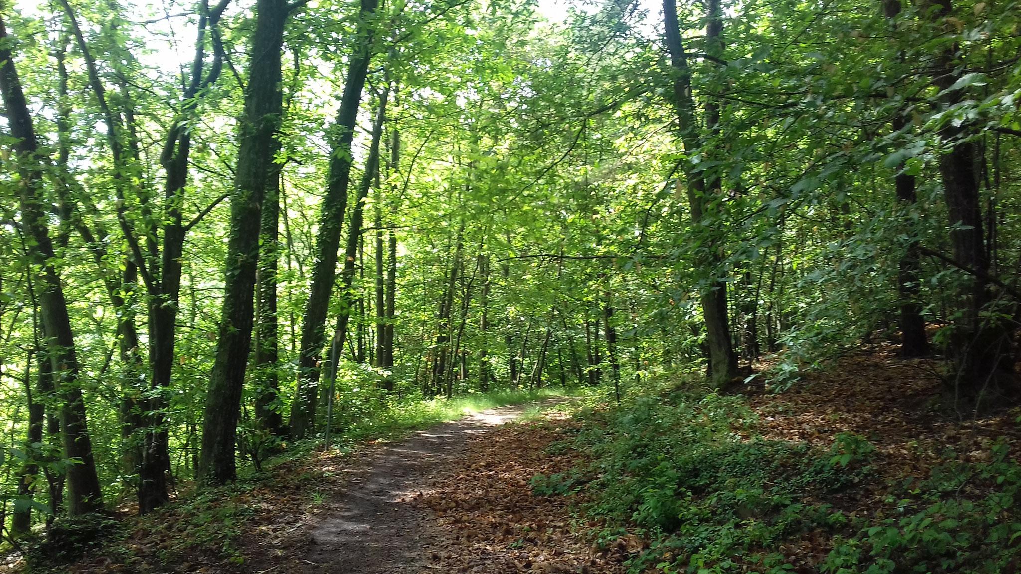 Waldweg Bobenheim