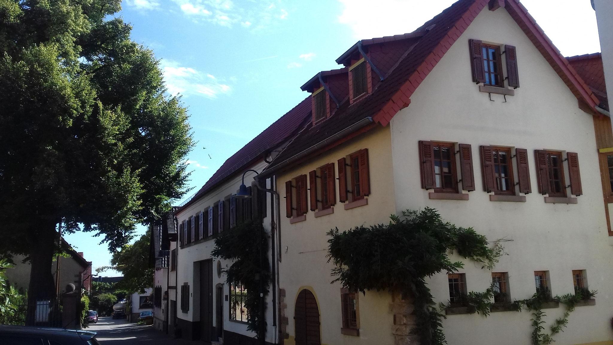 Hausansicht Leiningerstr. im Sommer