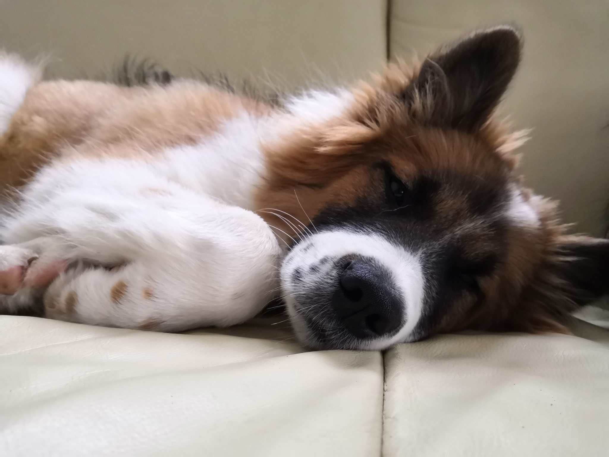 Greta beim Mittagsschlaf