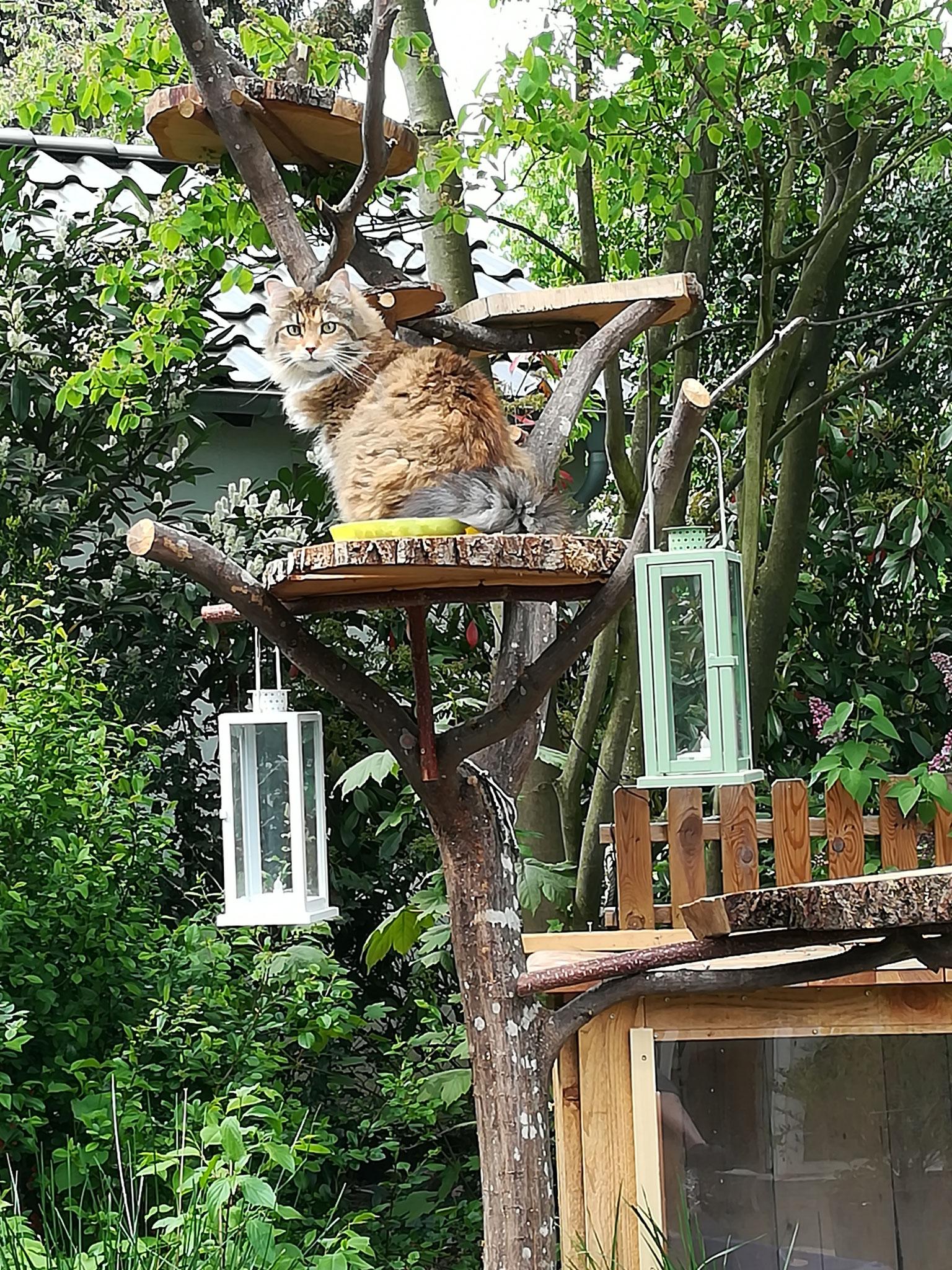 Flocke auf ihrem Katzenbaum