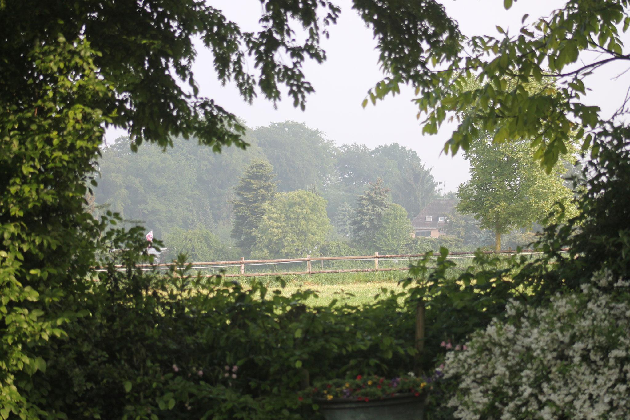 der Blick aus unserem Grundstück auf die Pferdekoppel