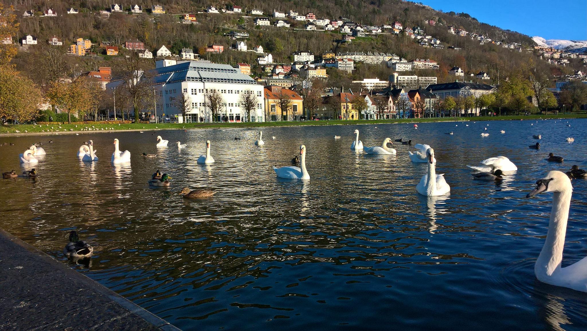 Im Bergens Stadtpark