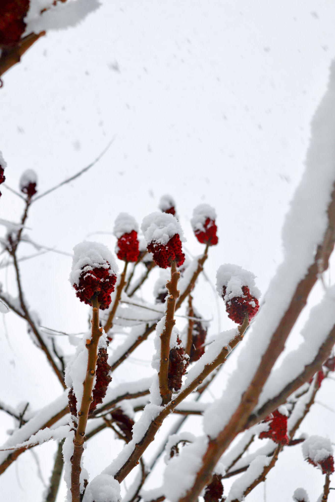 Erster Schnee in Riga