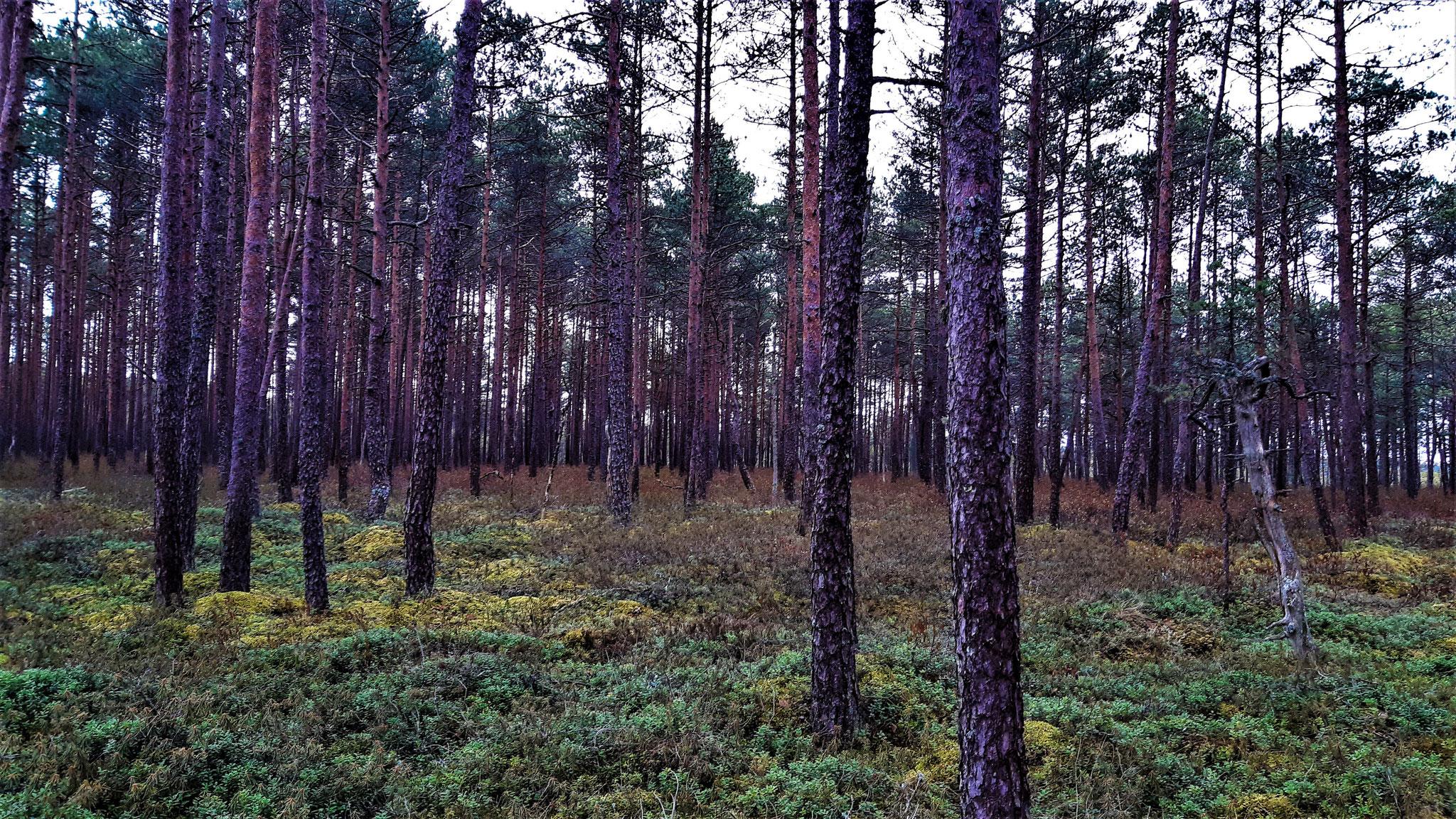 Ich seh den Wald vor lauter Bäume nicht