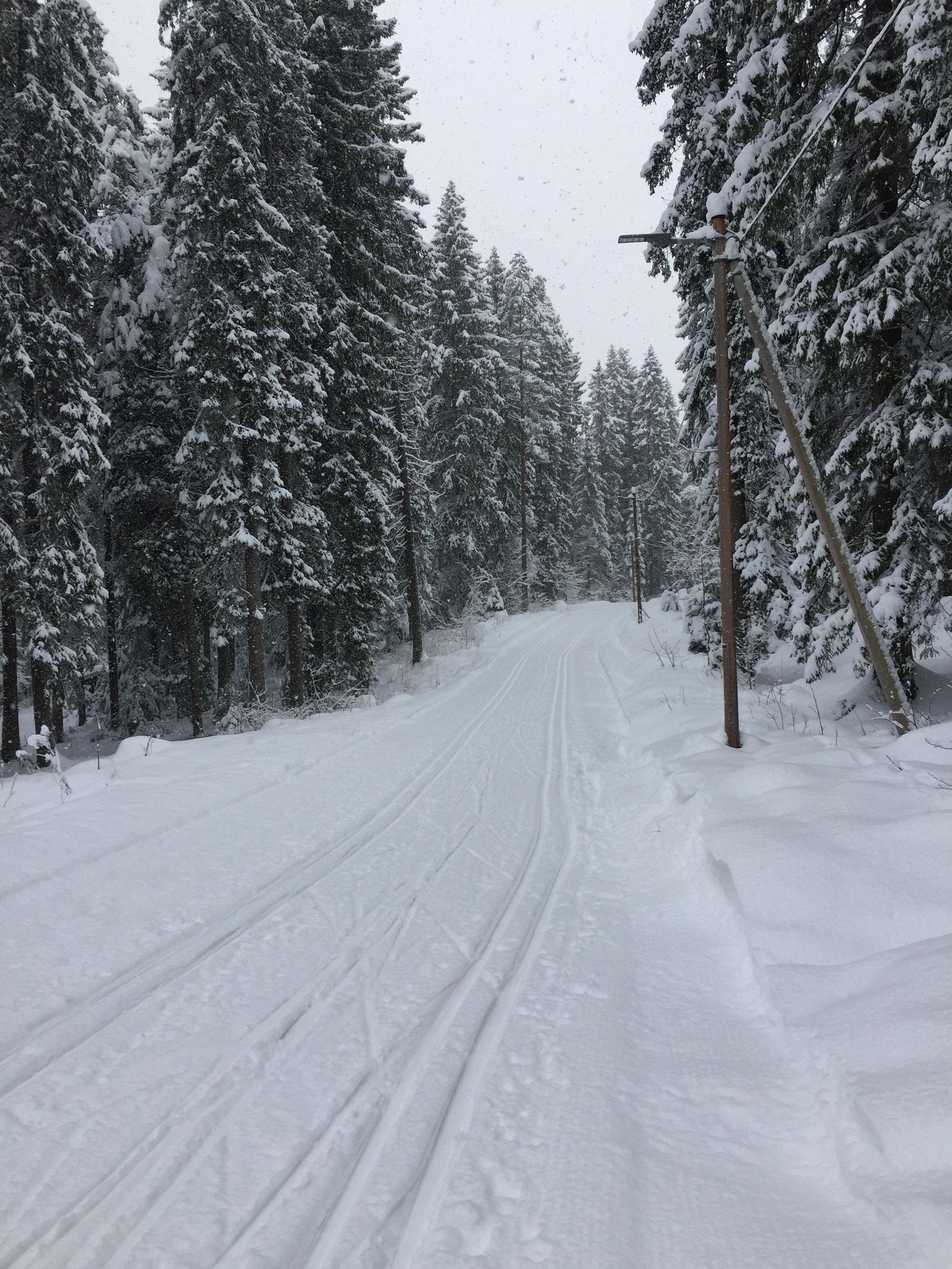 Skistrecken direkt in Oslo