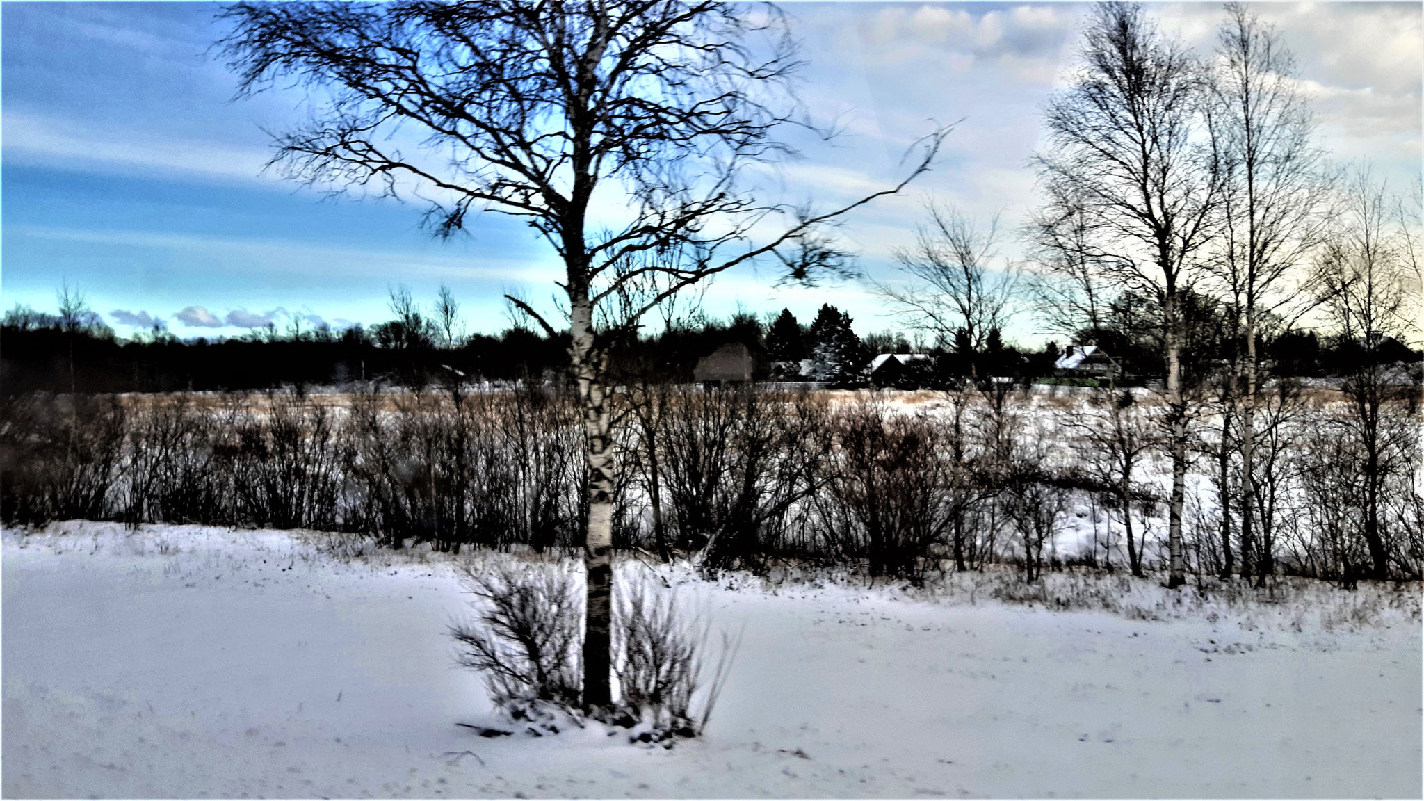 Est_Innen sehen in diesem Bild mehr als nur den Baum im Schnee - Finde die Flagge ;)