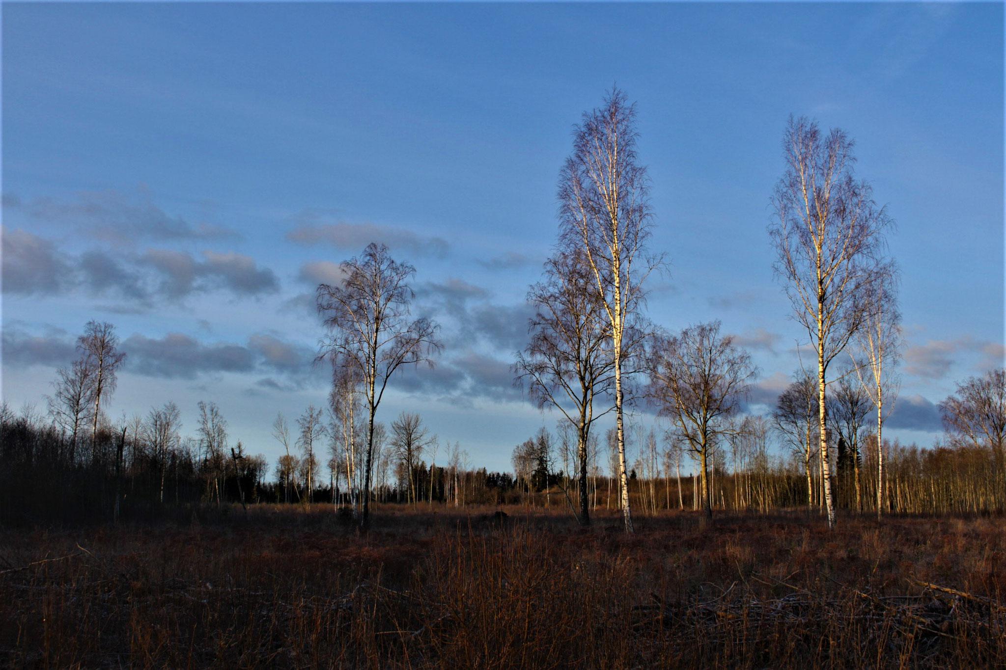 Ich seh den Baum vor lauter Himmel nicht
