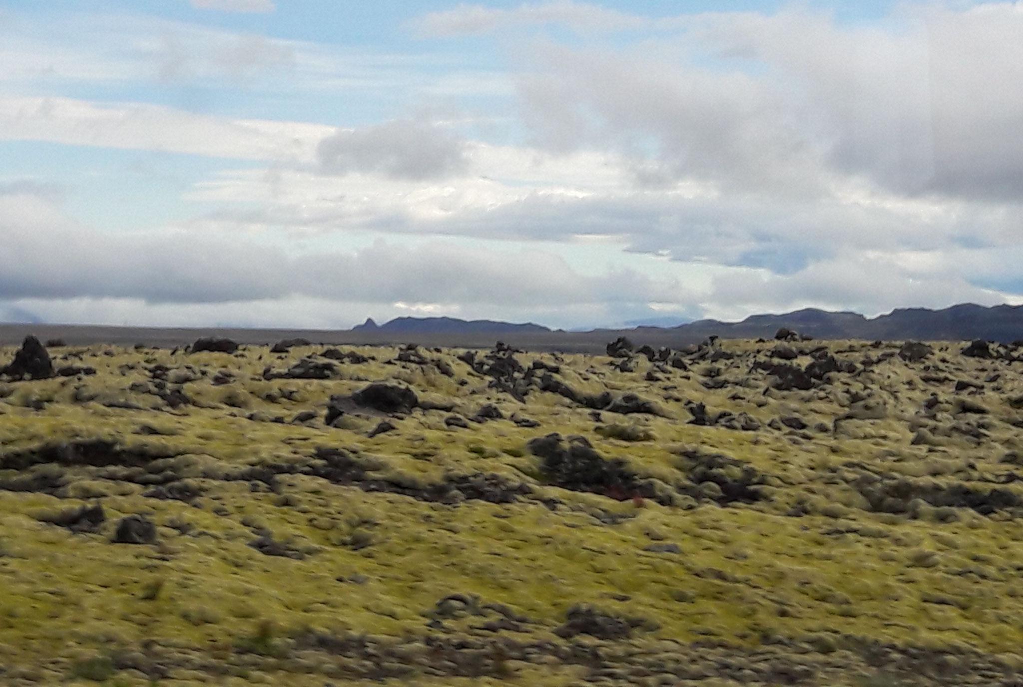 Ein typisches Lavafeld auf Island