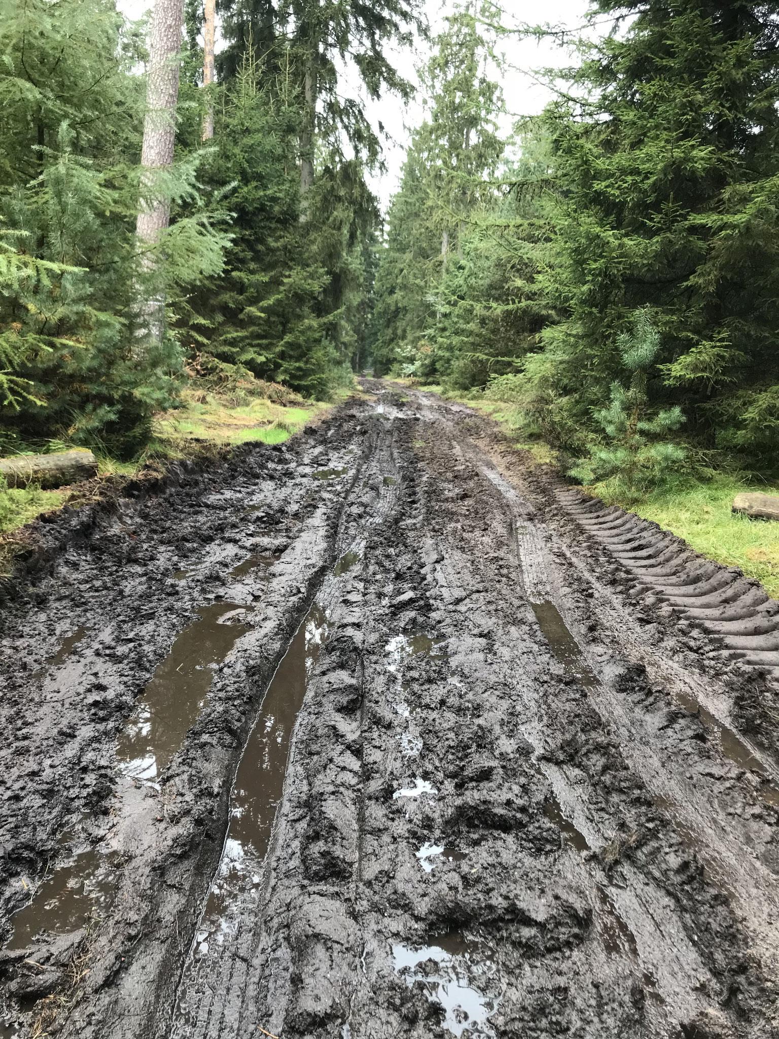 zerstörte Waldwege