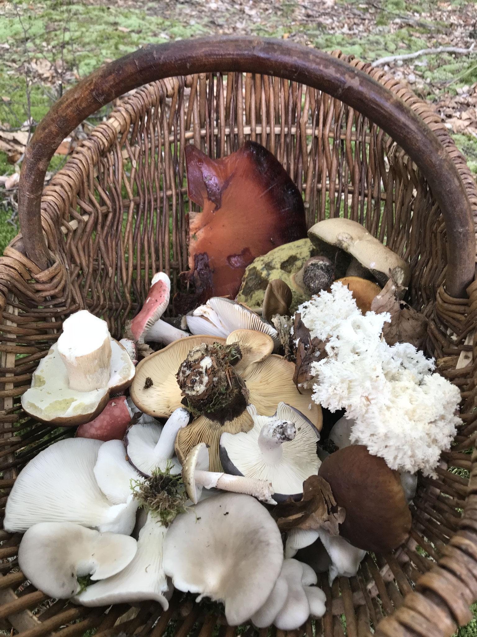 Sammelgut für die Pilzausstellung