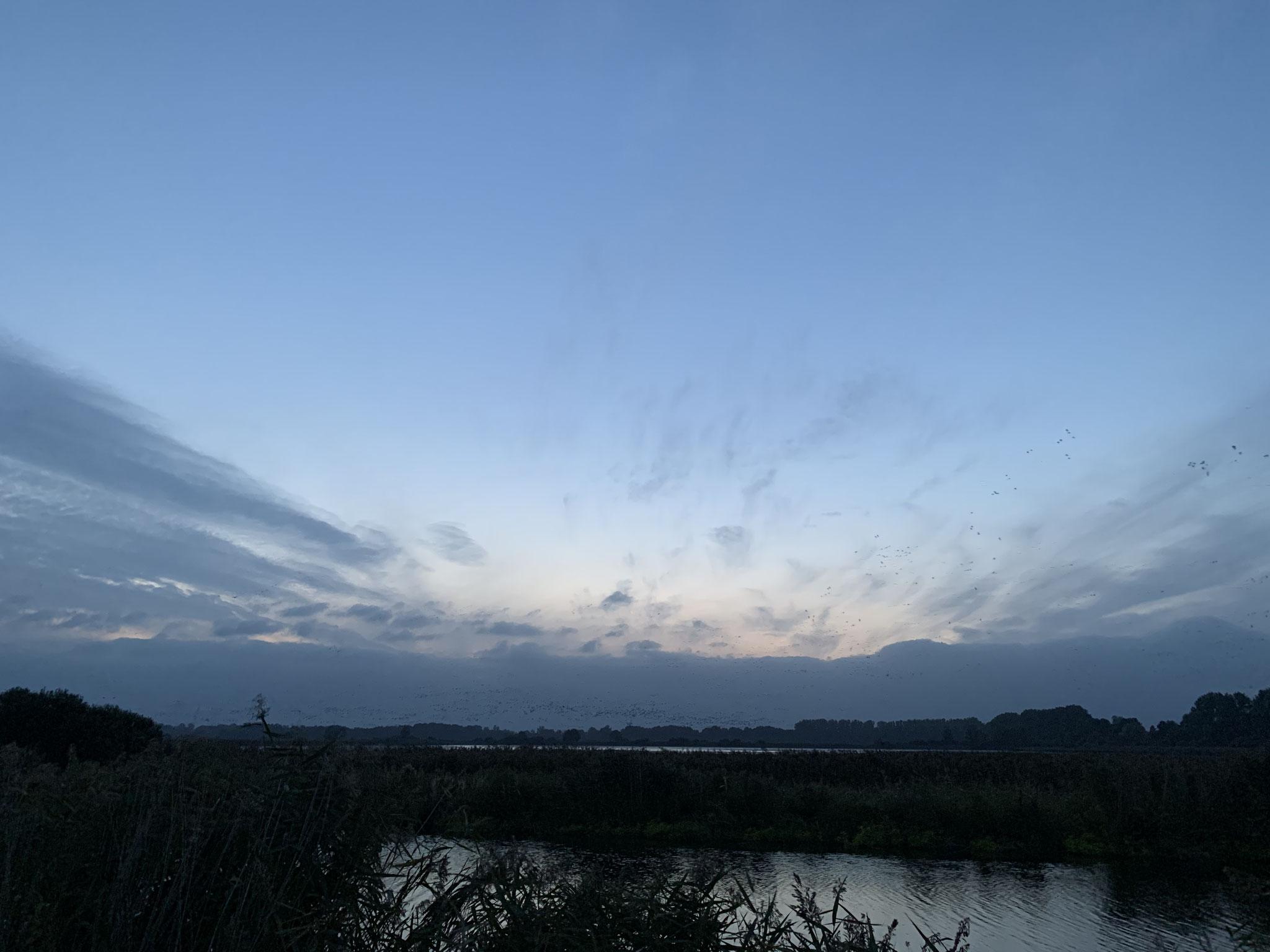 1. Mal den Vogelzug von Gänsen, Kranichen und Kiebitzen in der Lewitz beobachtet. Fantastisch!