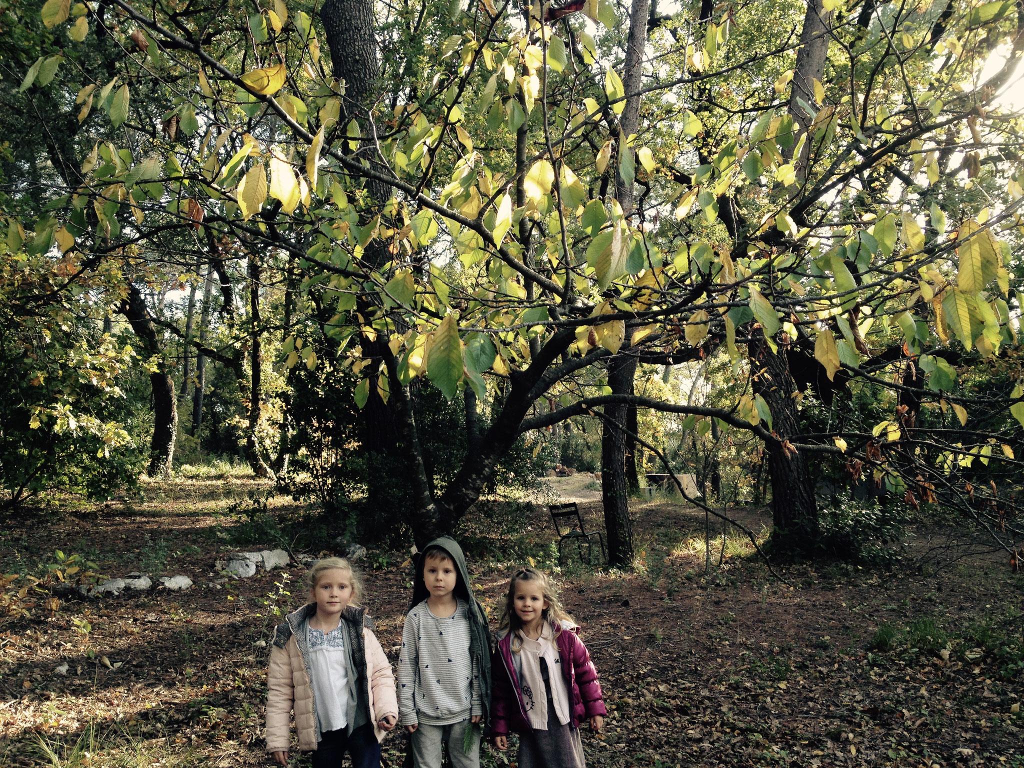 Klara, Luca et Enora devant le cerisier