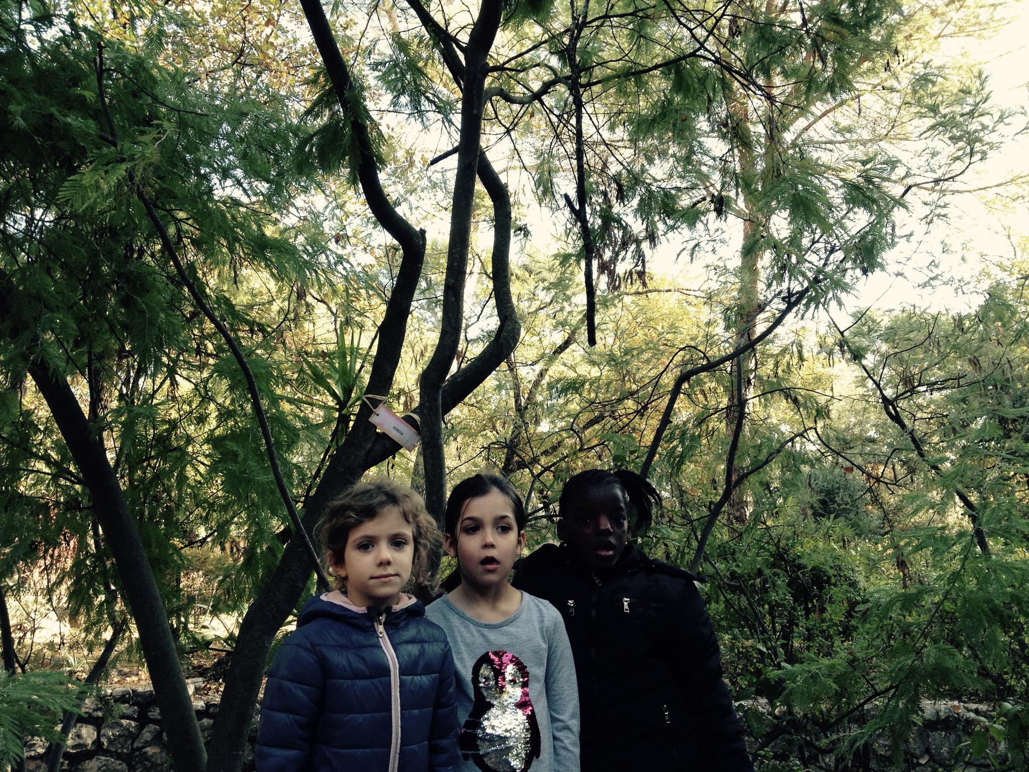 Sienna, Soline et Elisa devant le mimosa