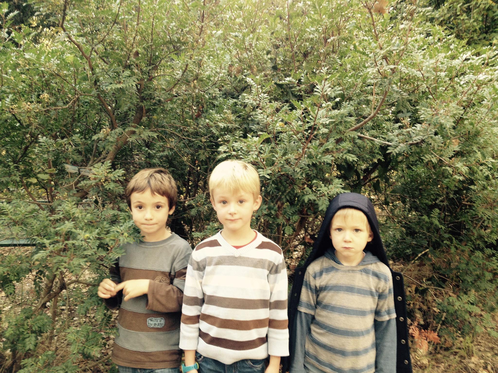Nathanaël, Thomas et Daryl devant le pistachier lentisque