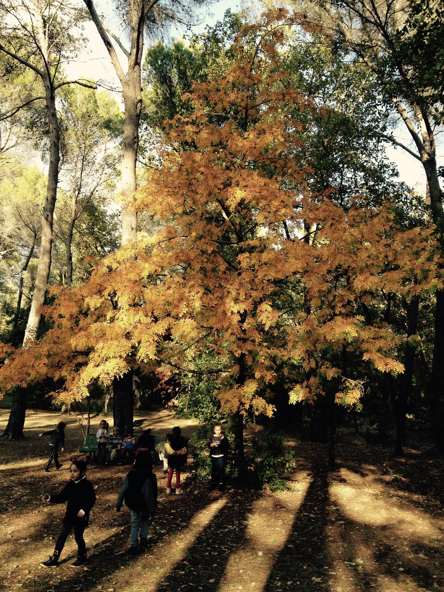 Le sorbier et sa parure d'automne