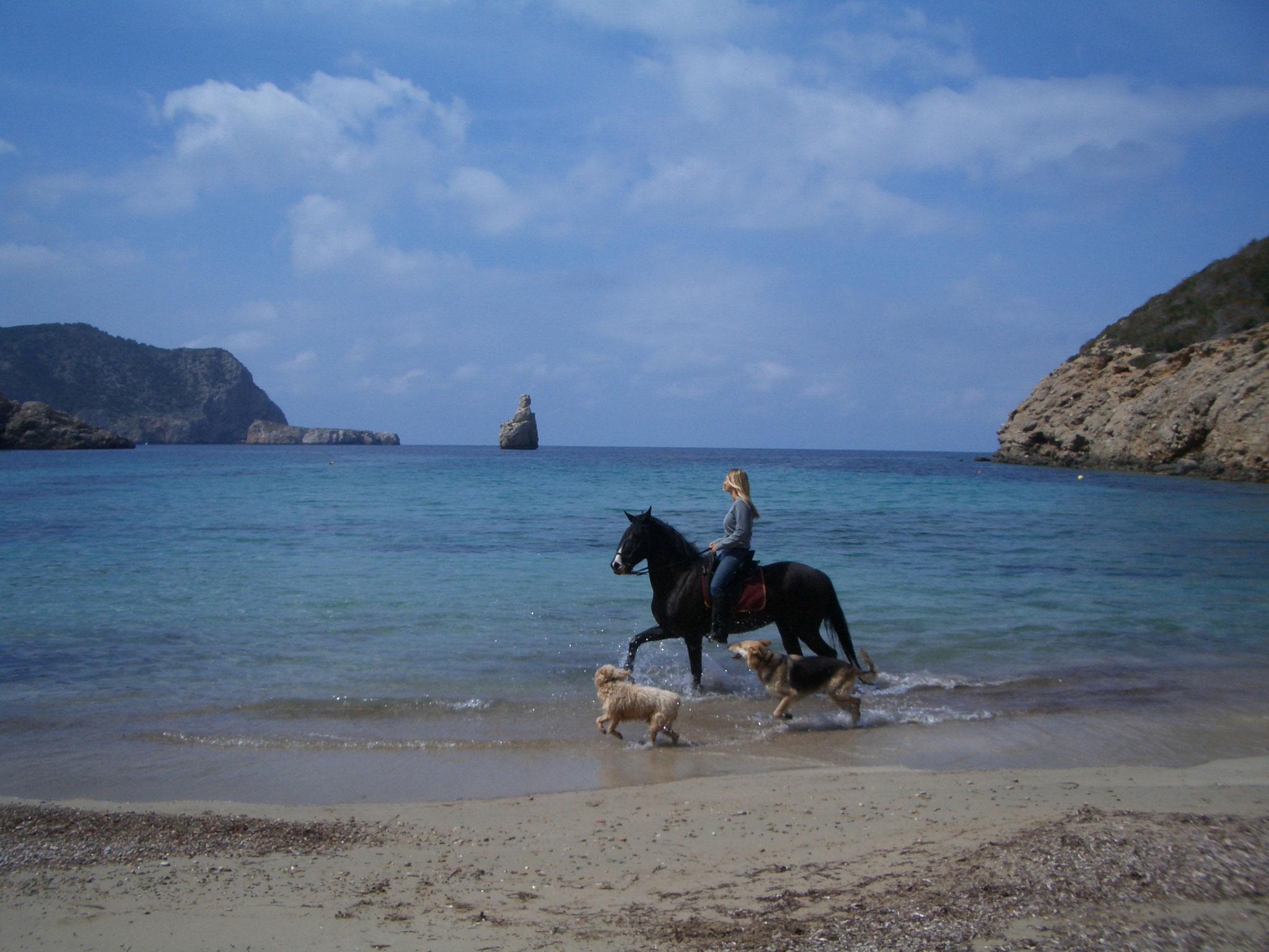 Ibiza- Ausritt ans Meer