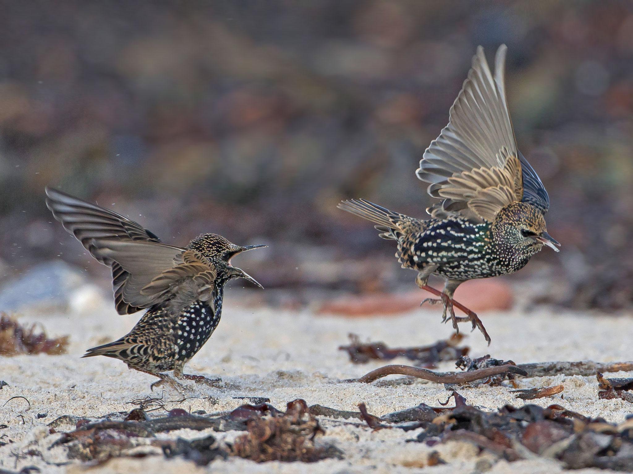 ... oder ihre kleinen Streitigkeiten am Strand austragen