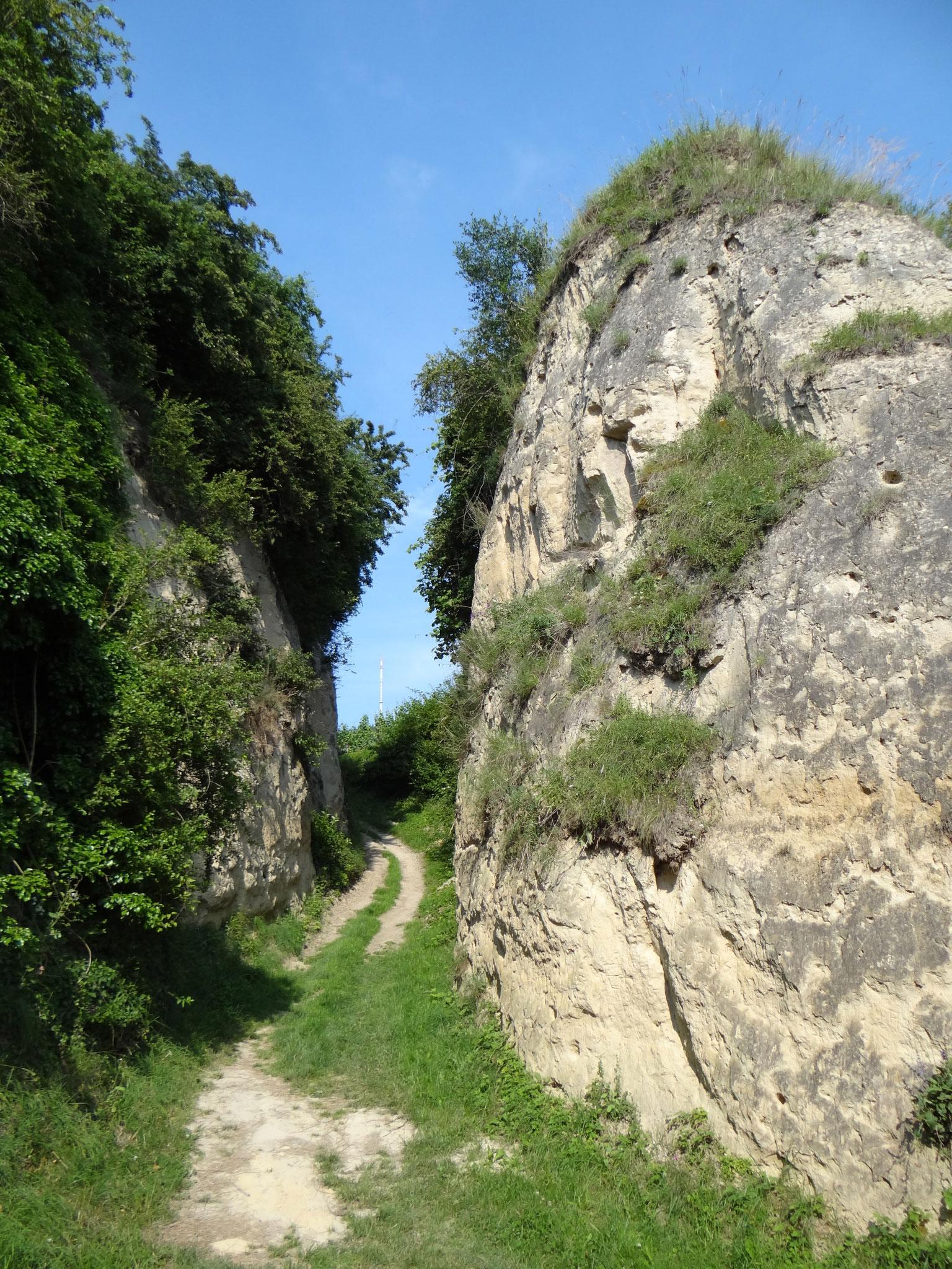 Das milde Klima und die zahlreichen Lösshänge für das Anlegen von Bruthöhlen ...