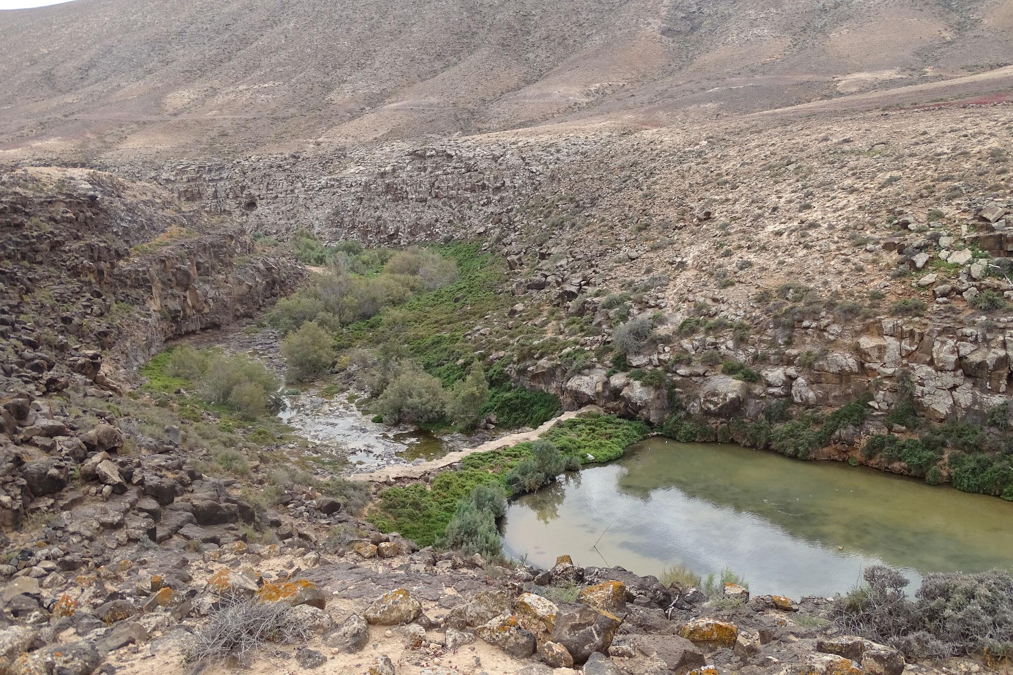 Ein weiterer Beobachtungsort mit kleinen Wasserreservoirs befindet sich nahe Puerto Rosario, der Barranco de Rio Cabras