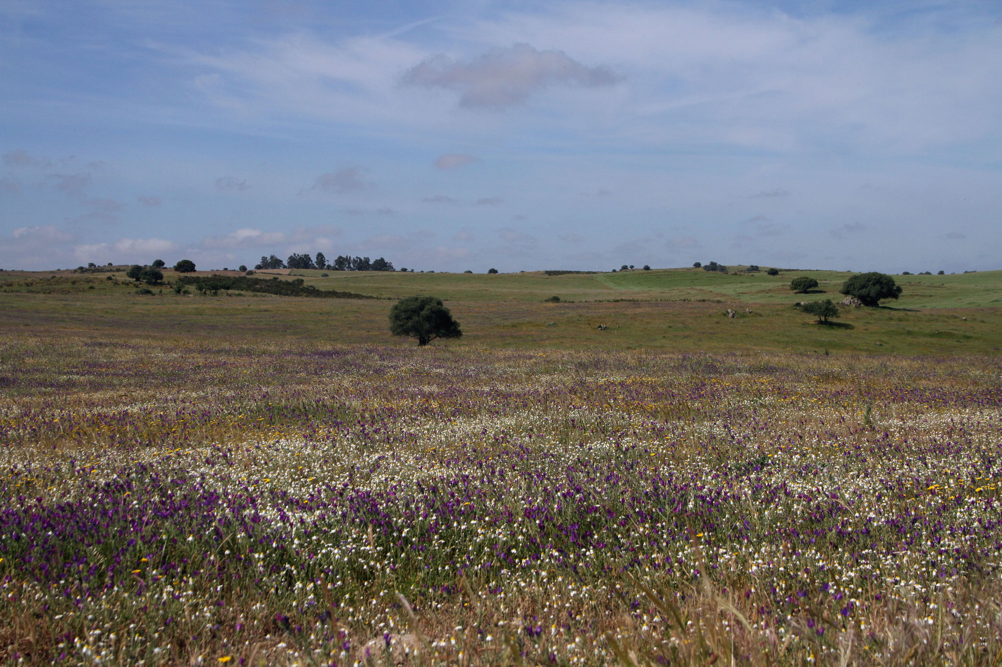 Es gibt aber auf dem riesigen Gelände sehr vielfältige naturnahe und nicht genutzte Flächen