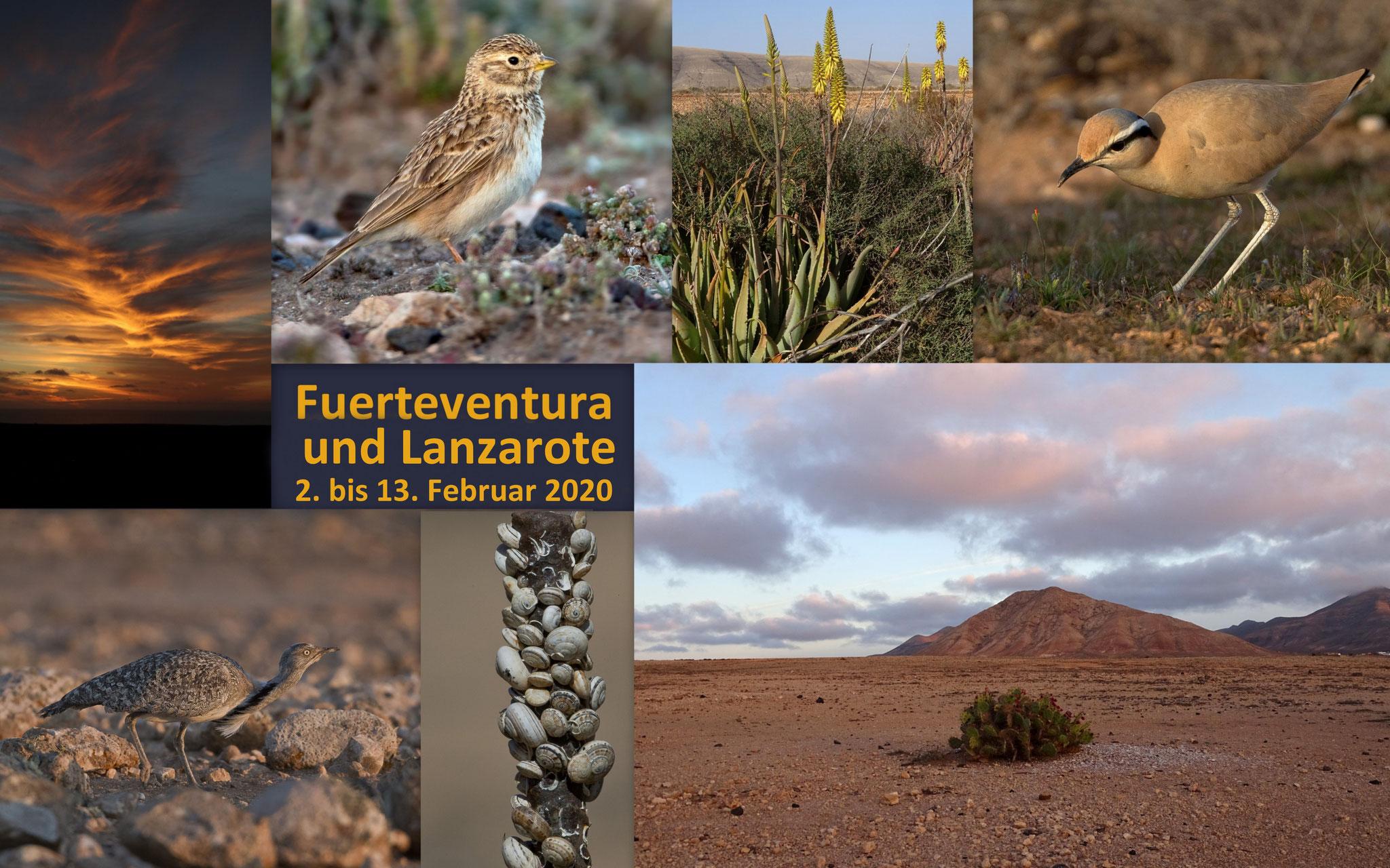 Als wir anfangs Februar nach Fuerteventura flogen, war Corona in Europa noch kein Thema - zum Glück!