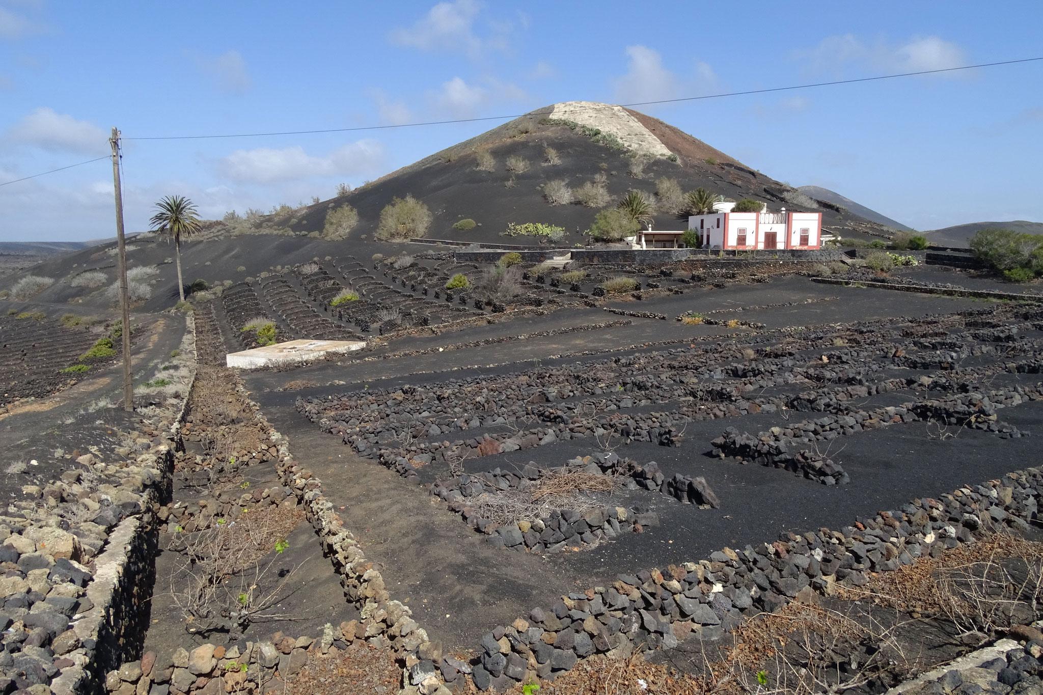 Ansonsten wollen wir einfach mal einen Eindruck dieser von Fuerteventura so unterschiedlichen Insel erhalten