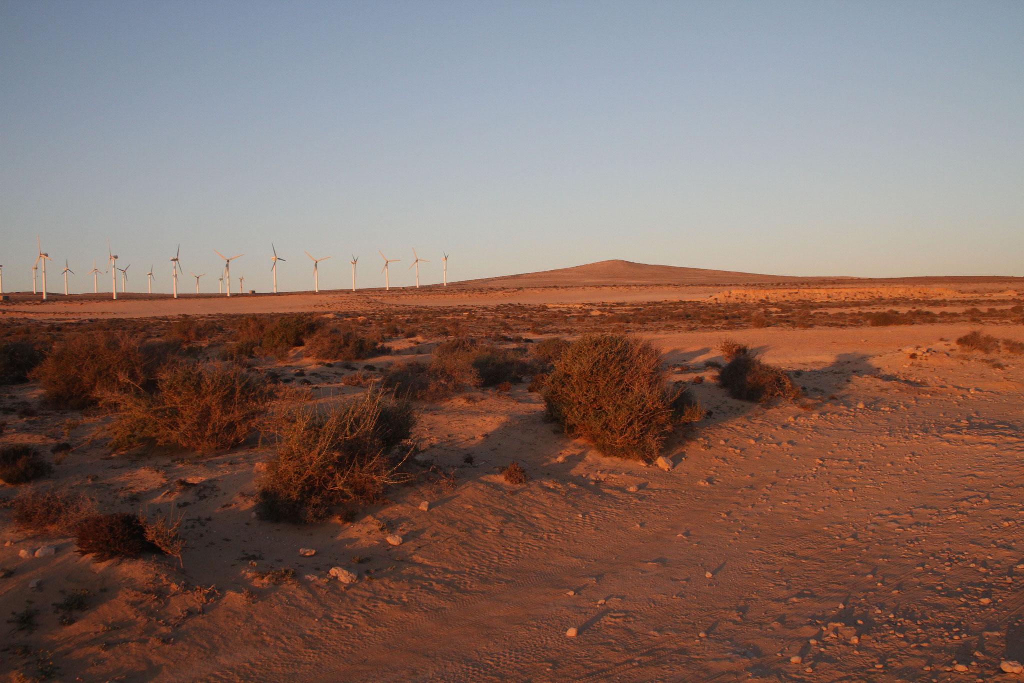 Am besten besucht man die Jandia für Vogelbeobachtungen vor Sonnenaufgang ...